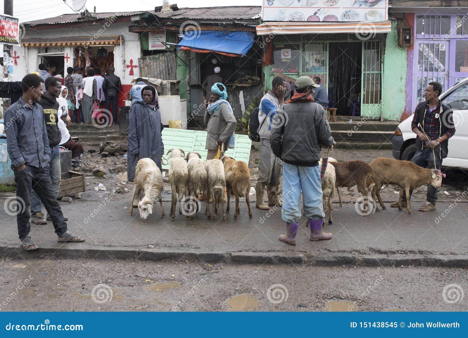 Sälja boskap i Addis Ababa