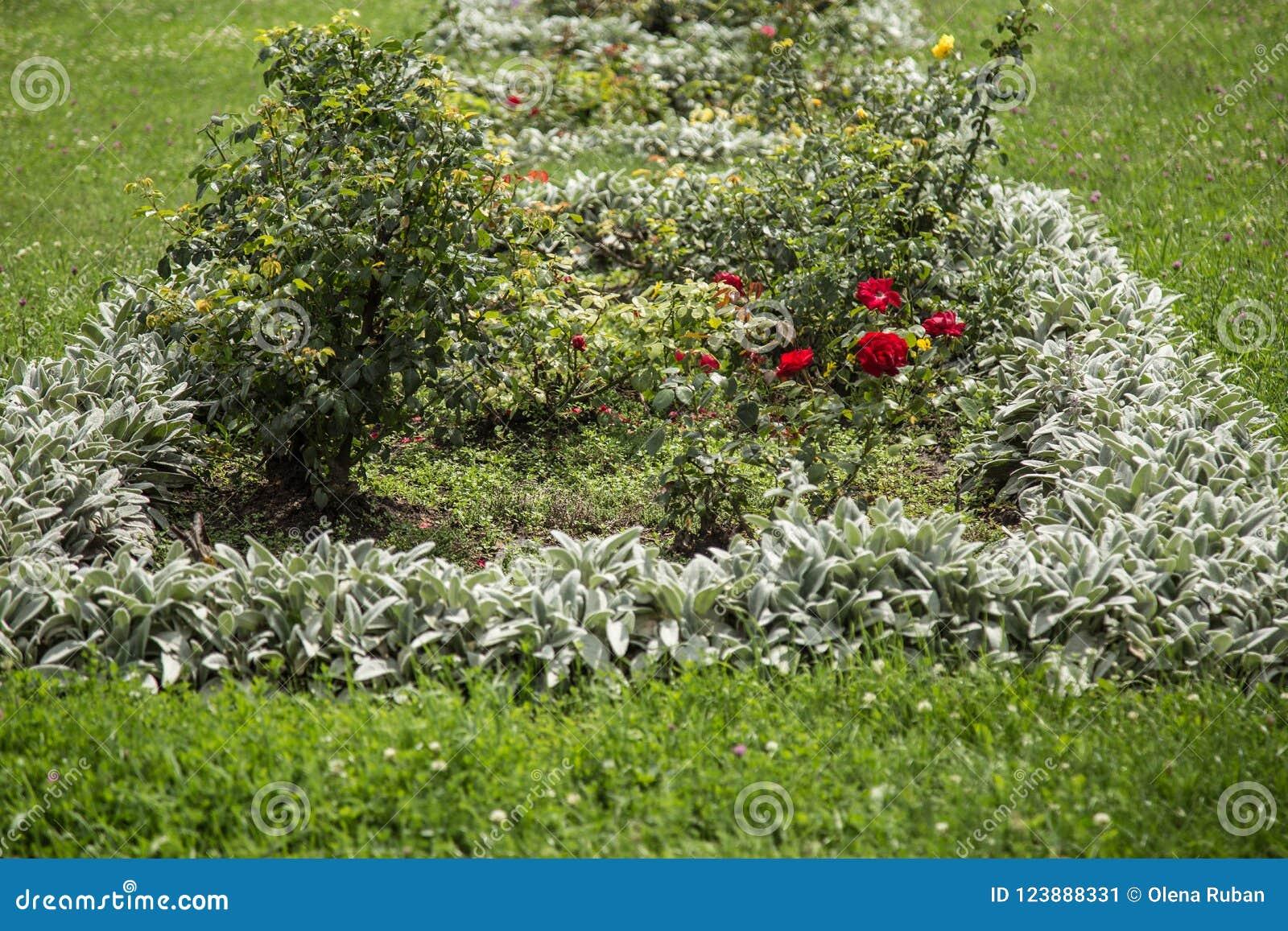 Säng med rosor och andra blommor