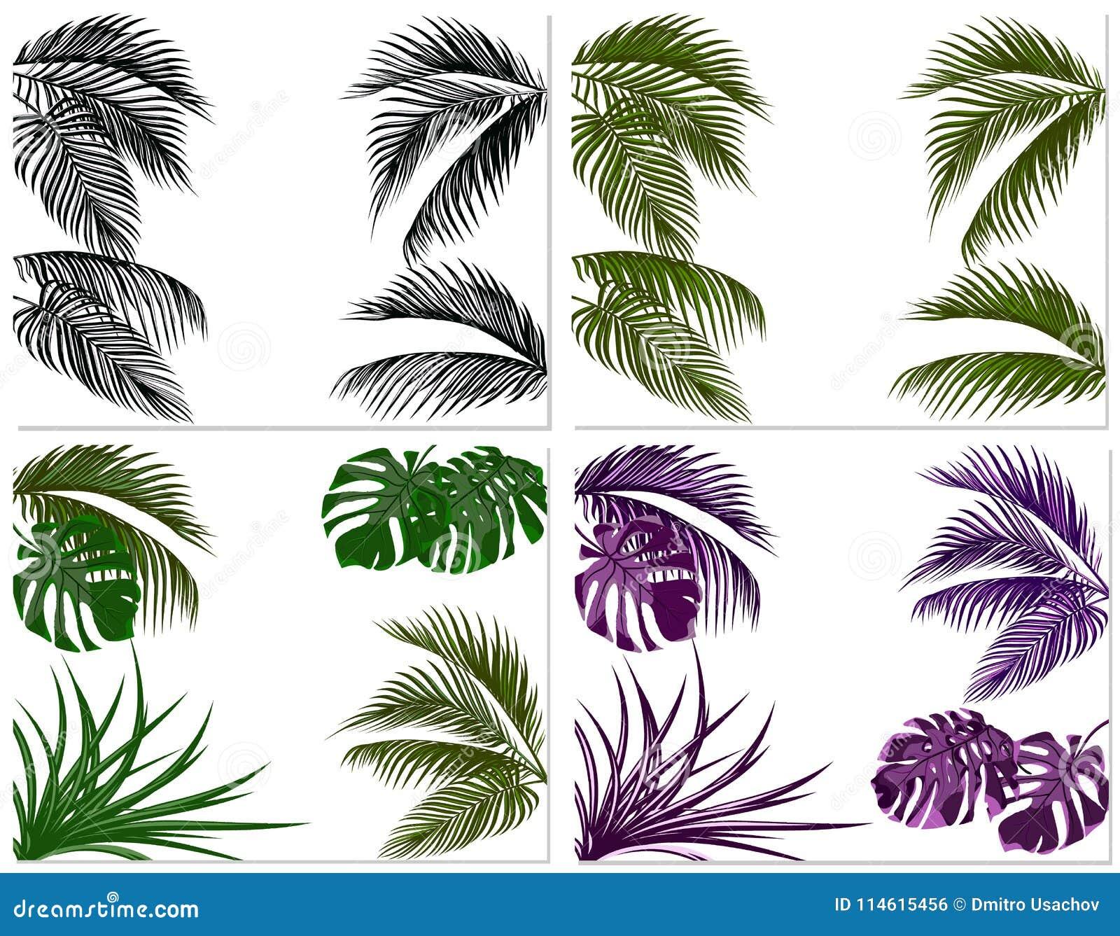 Sätze Der Bunten Blätter Der Tropischen Palmen Monster, Agave ...