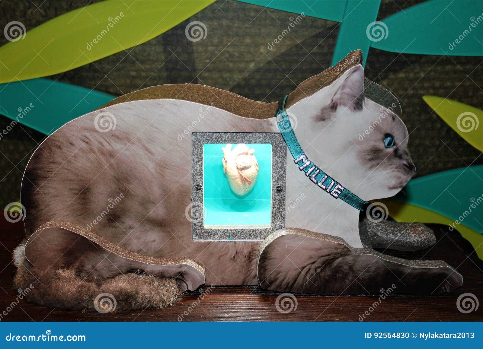 Säugetier-Herz stockfoto. Bild von katze, bild, knotenpunkte - 92564830