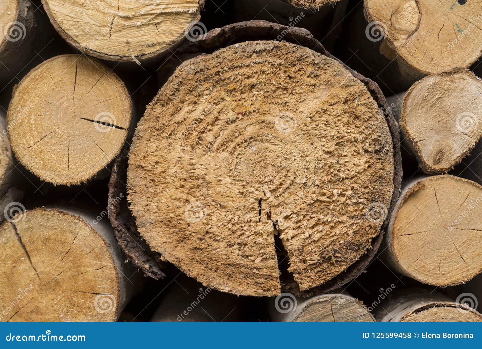 Sågade trädstammar som sågas, trä, wood textur, naturligt som är materiell,