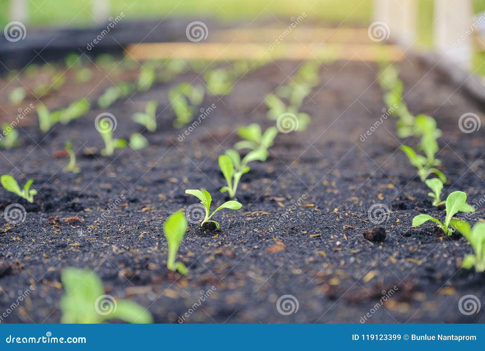 Sélectif de la jeune plante verte, plan rapproché de petits jeunes arbres dans le jardin