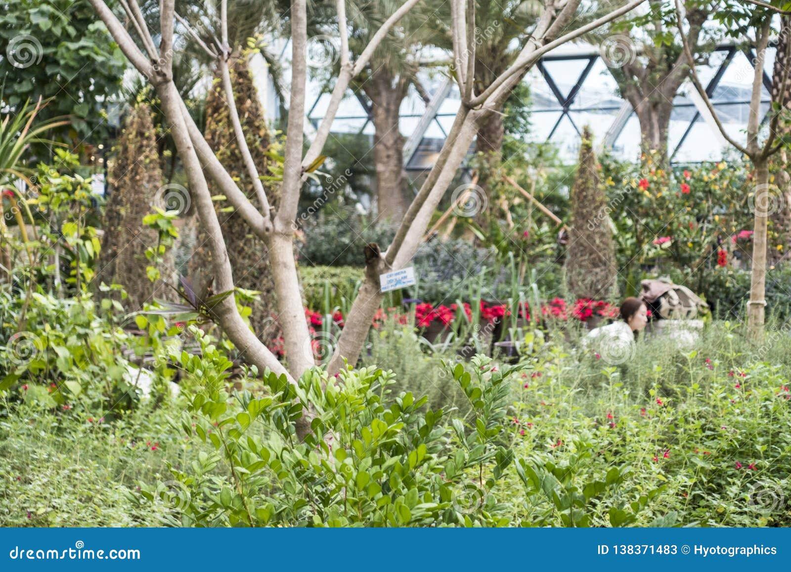 Séoul, Corée du Sud - 4 février 2019 : à l intérieur de la vue de la serre chaude du parc botanique de Séoul, Séoul, Corée du Sud