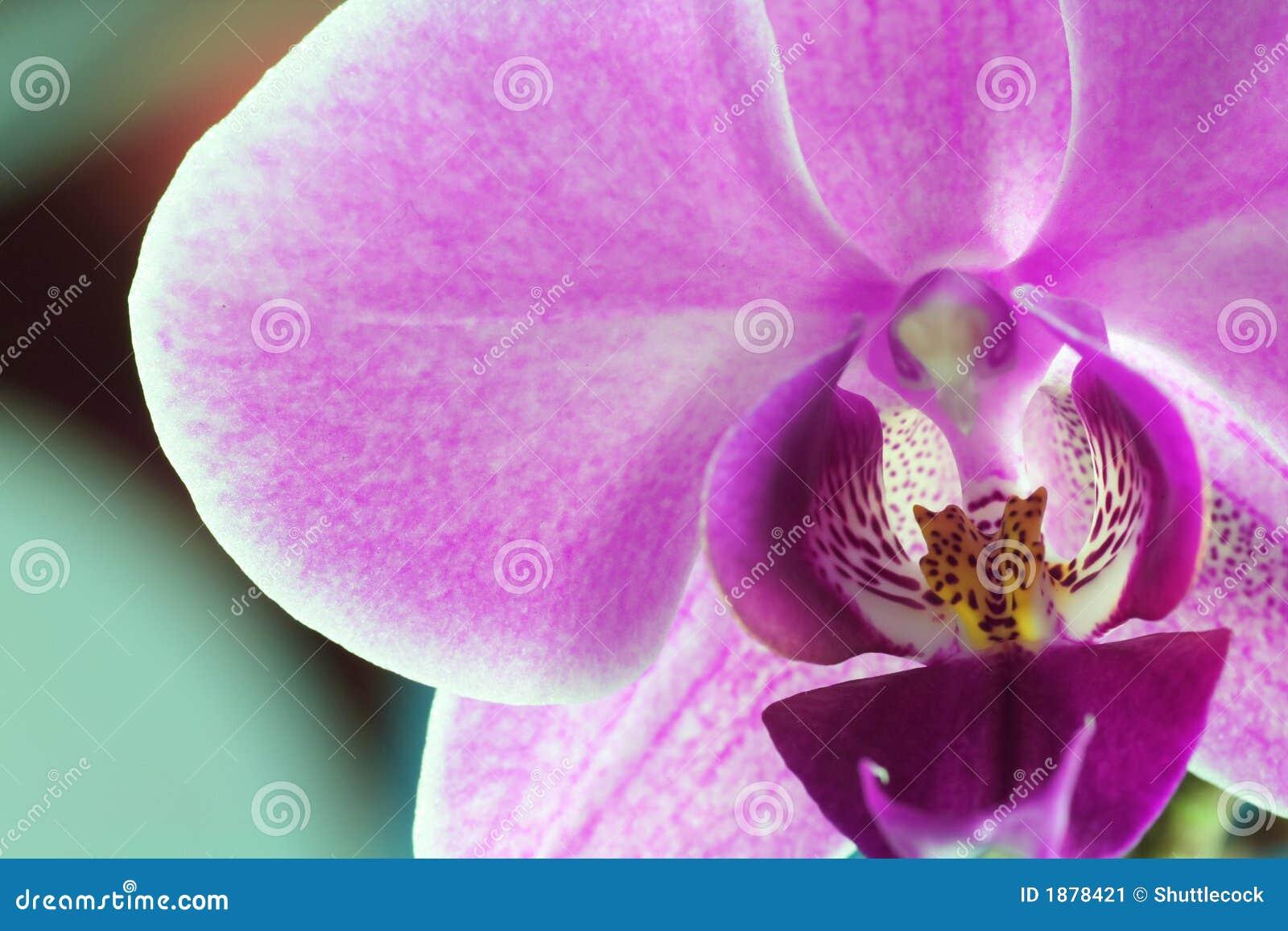 Série d orchidée