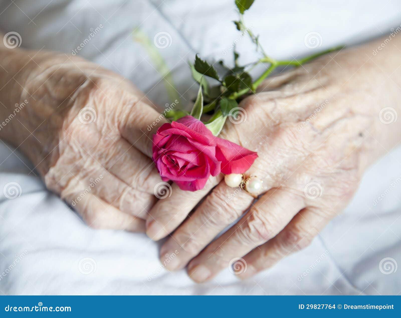 Mãos da senhora idosa com rosa-séries de fotos
