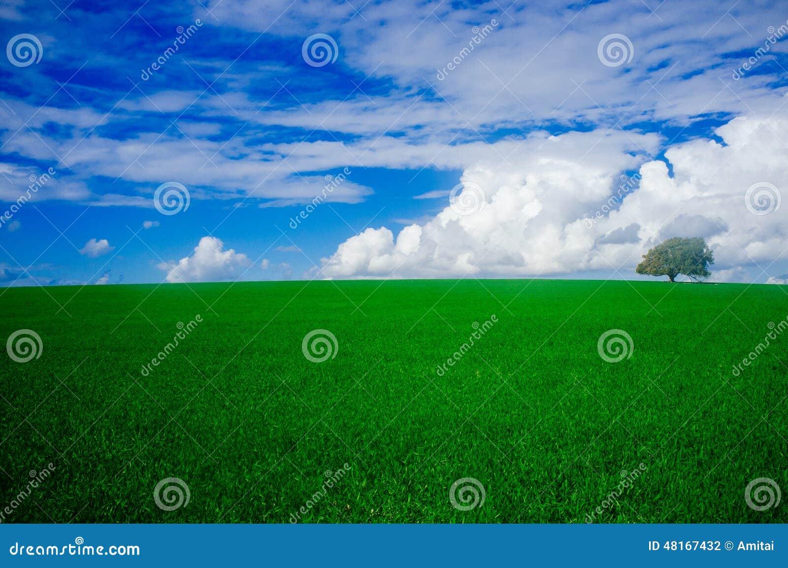 Série de Holyland - plaine de chêne de Manasseh (Ramot Manasseh) #1