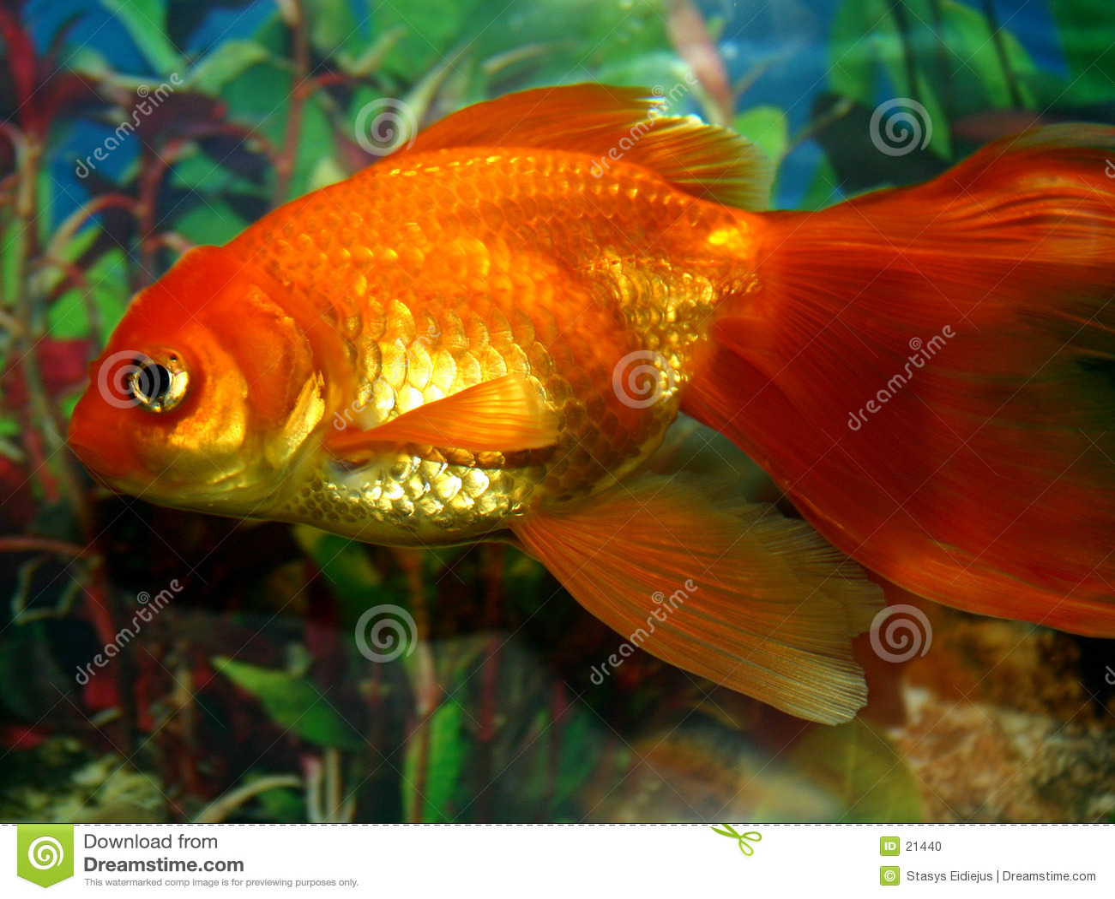 Série II de poissons