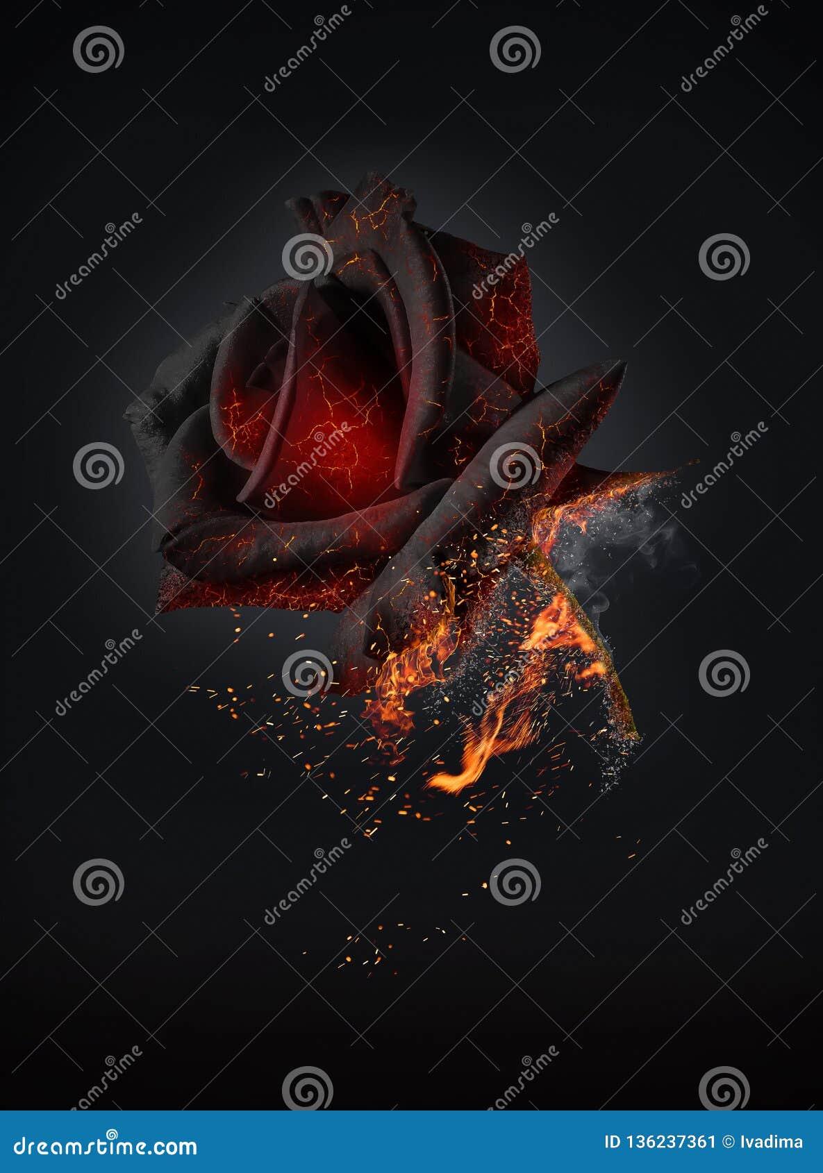 Símbolo color de rosa rojo ardiendo del amor apasionado