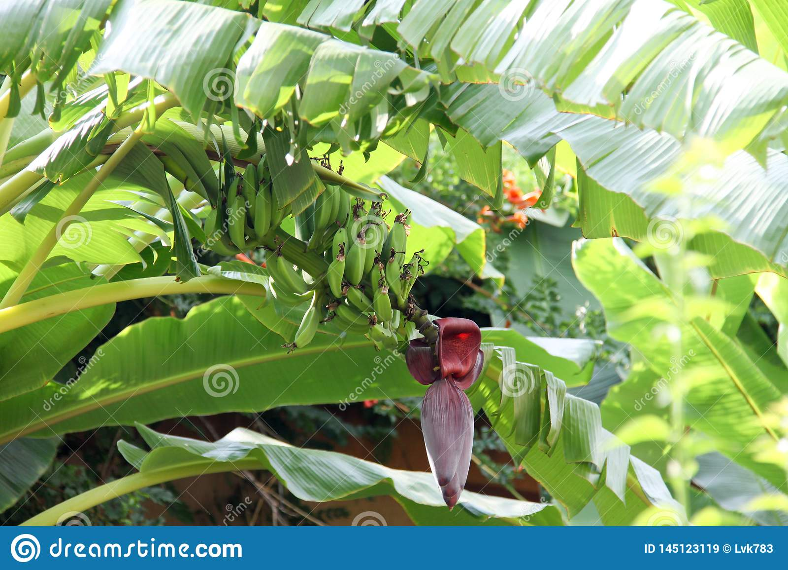 S?dra blommor, bananer