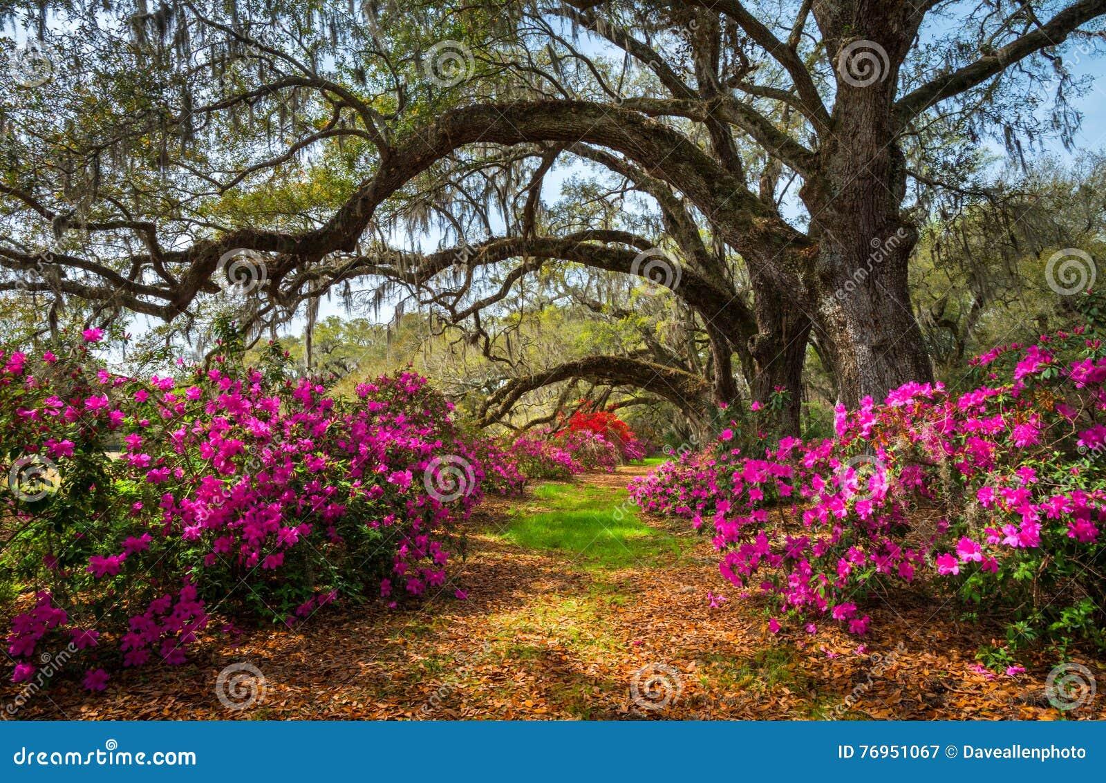 Södra Carolina Spring Flowers Charleston SC sceniska Lowcountry