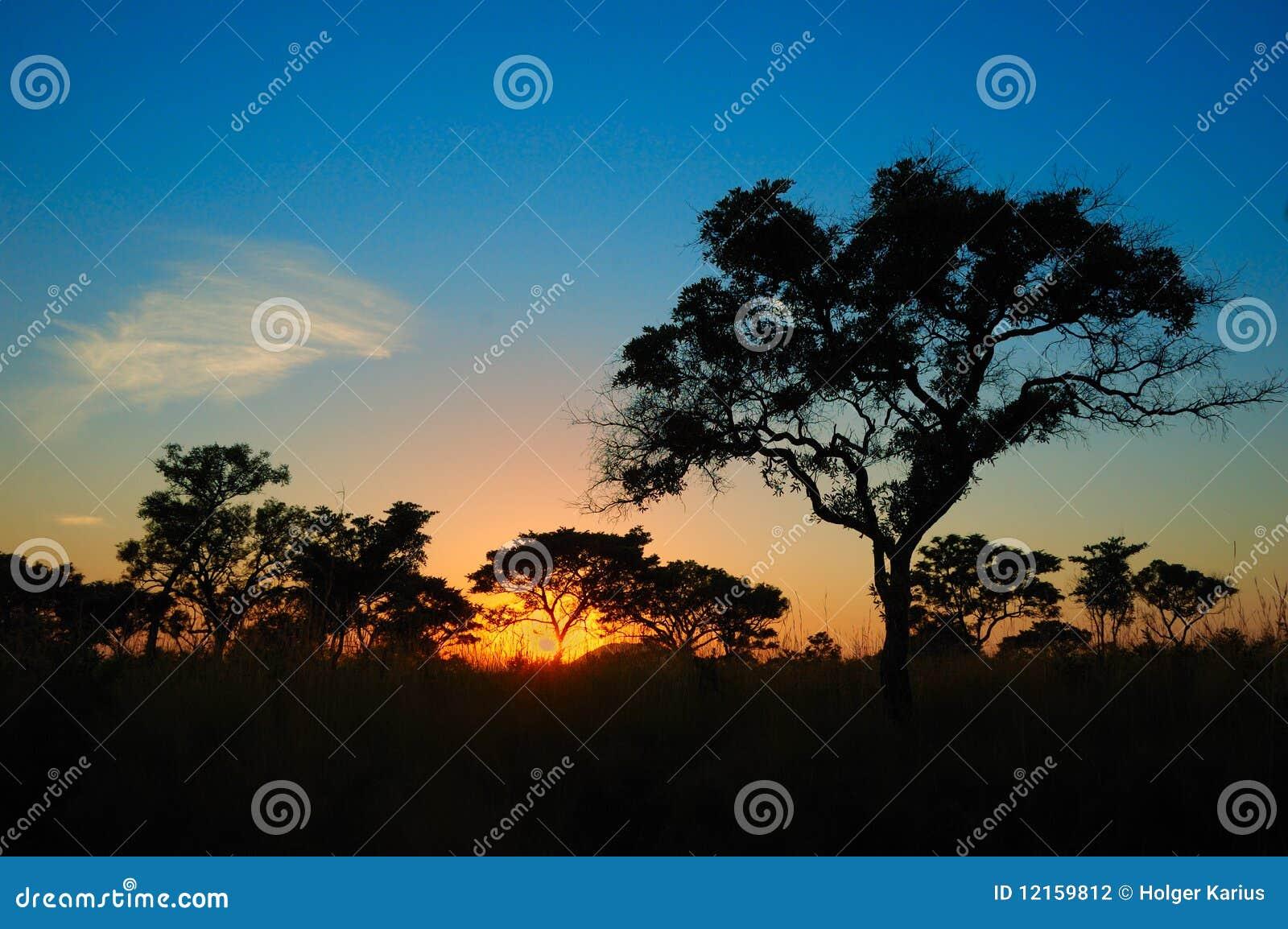 Södra solnedgång africa för afrikansk buske