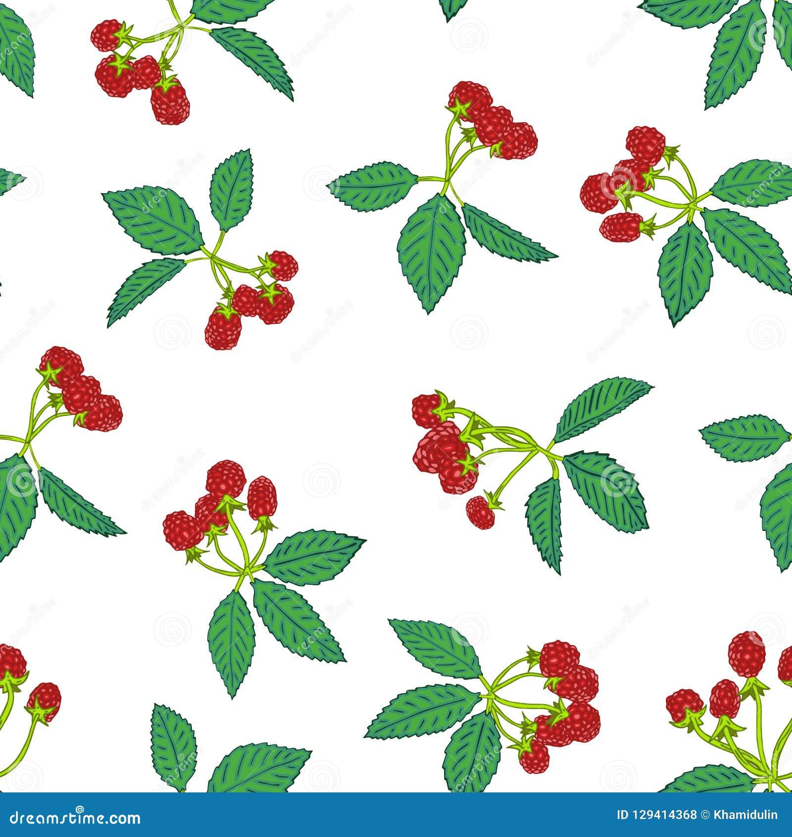Sömlös modell av björnbäret eller hallonet Bärbakgrund för textiler, tapet, uppsättningar av teckningar, räkningar, yttersida
