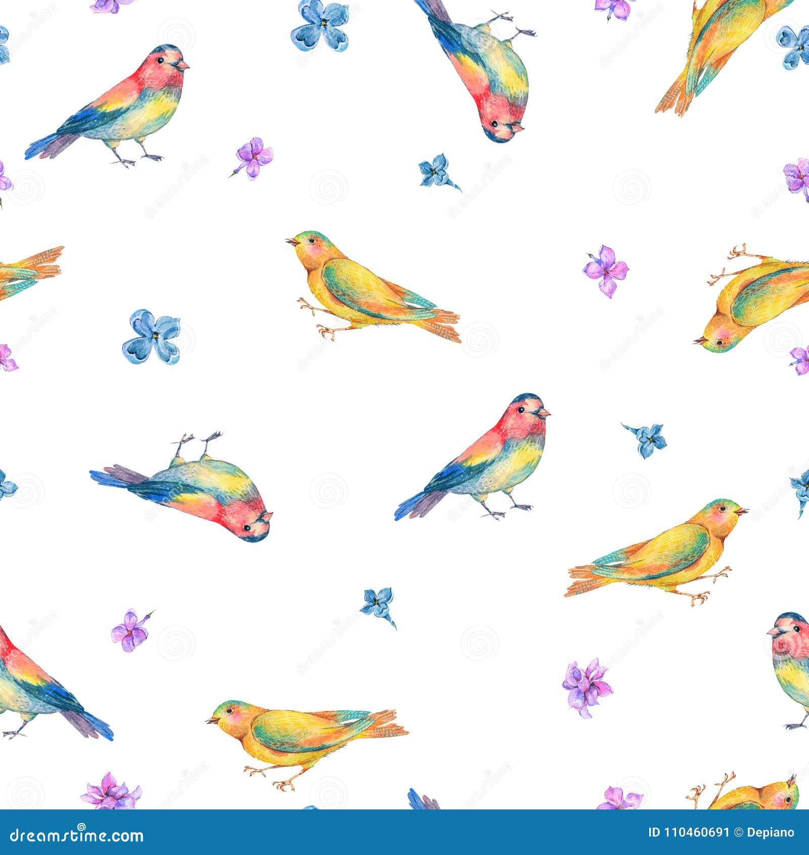 Sömlös modell för vattenfärg med fåglar