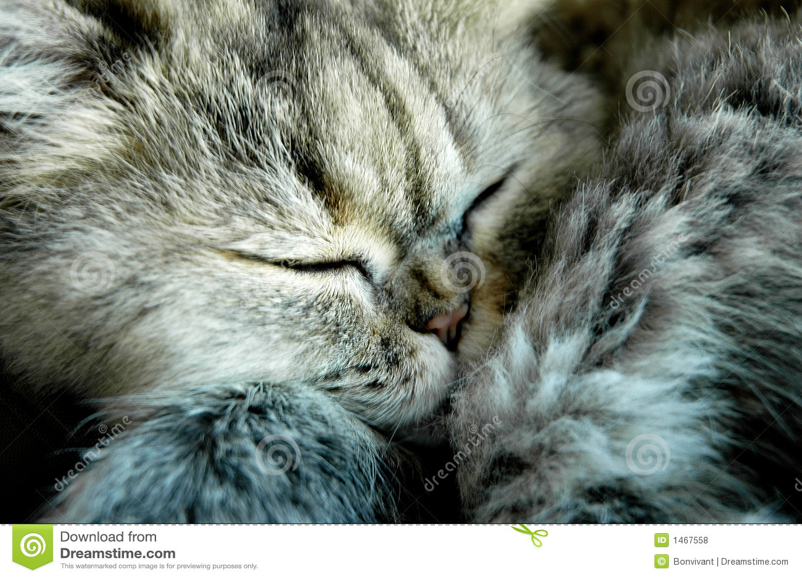 Sömnig katt