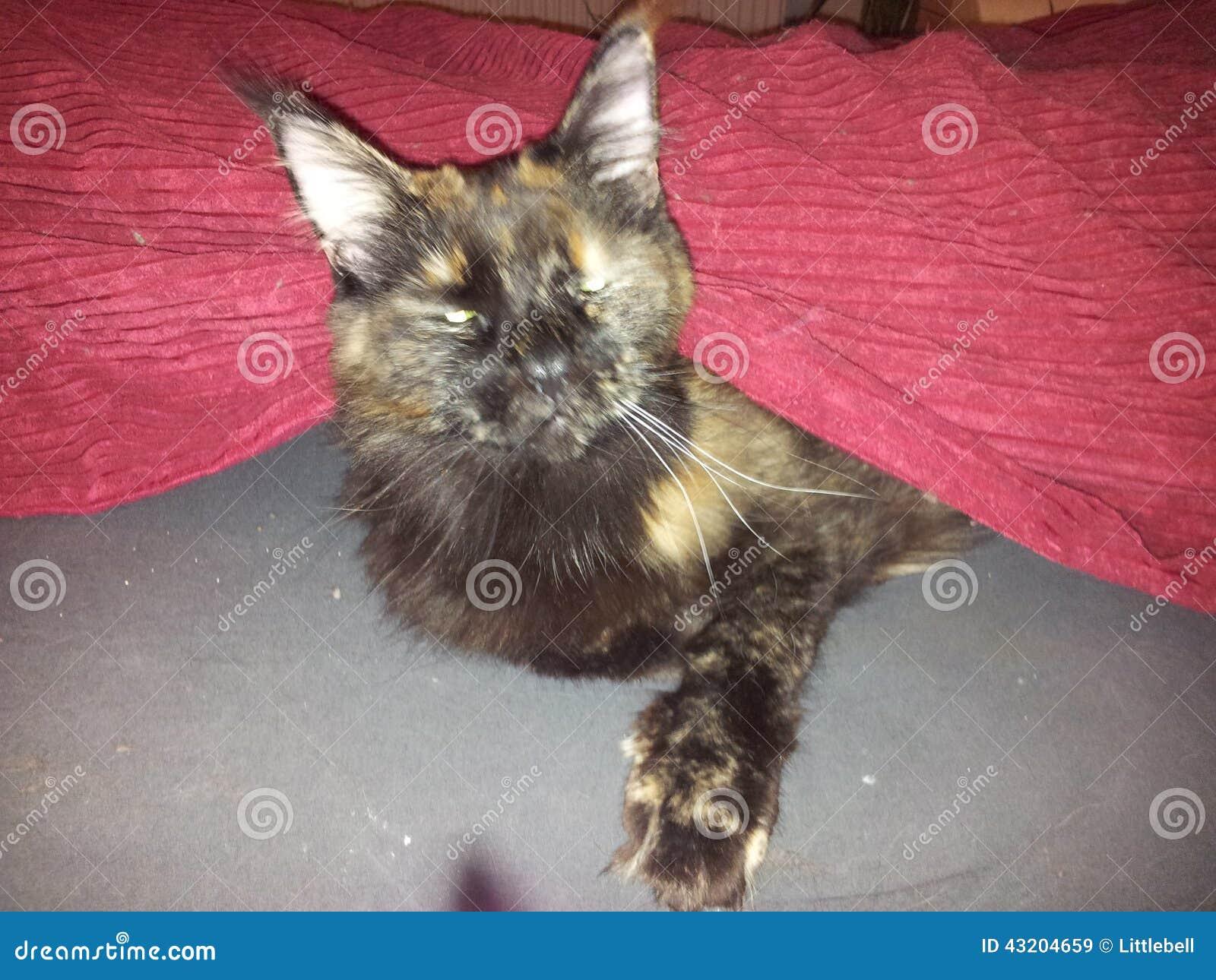 Download Sömnig katt fotografering för bildbyråer. Bild av underlag - 43204659