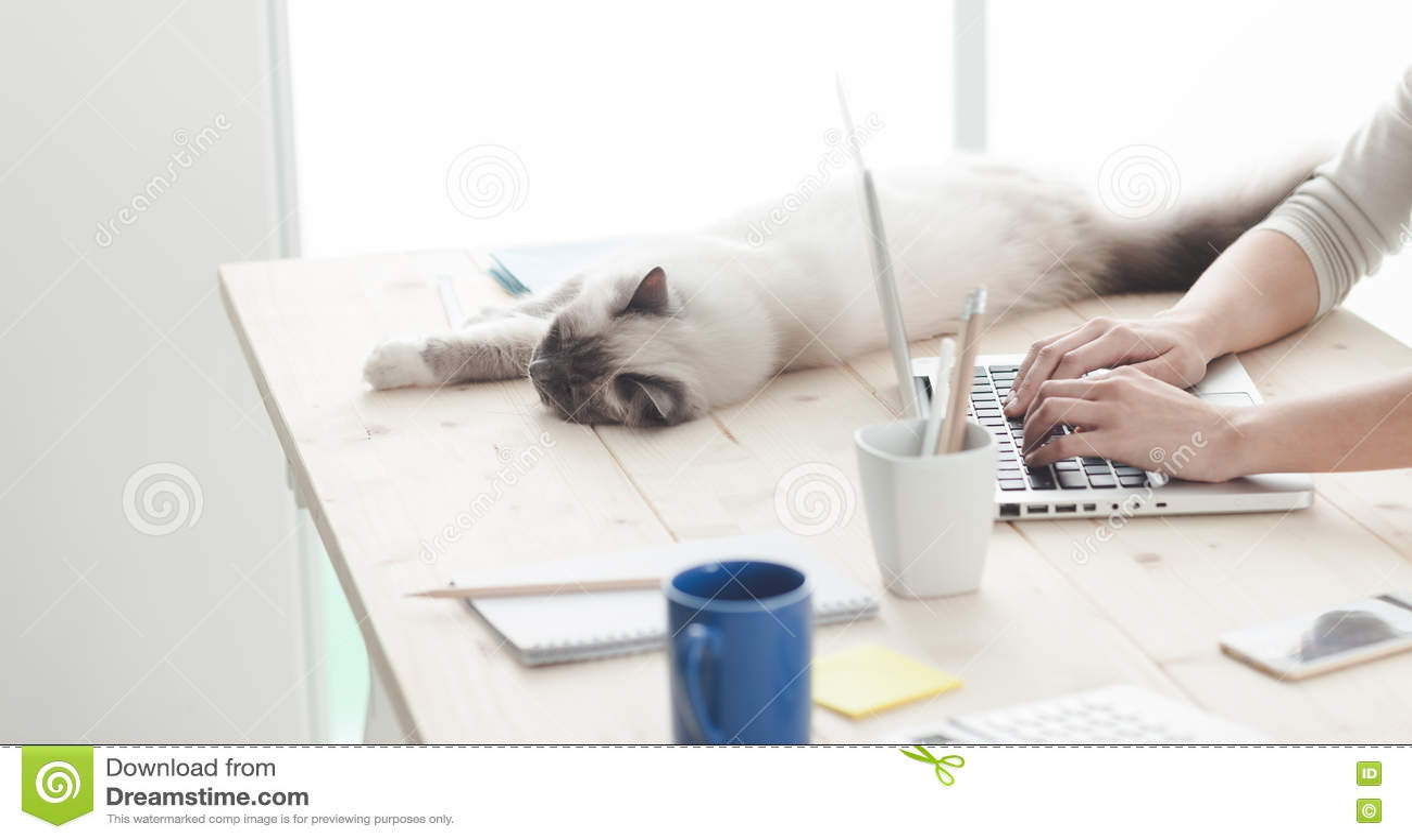 Sömnig katt på ett skrivbord