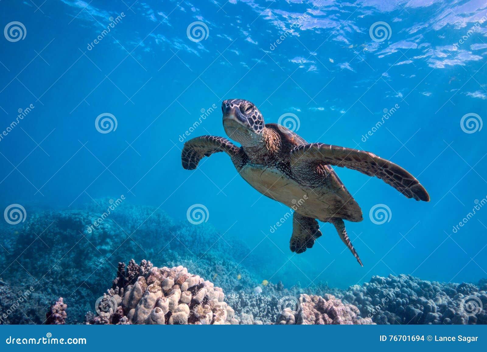 Sömnig sköldpadda