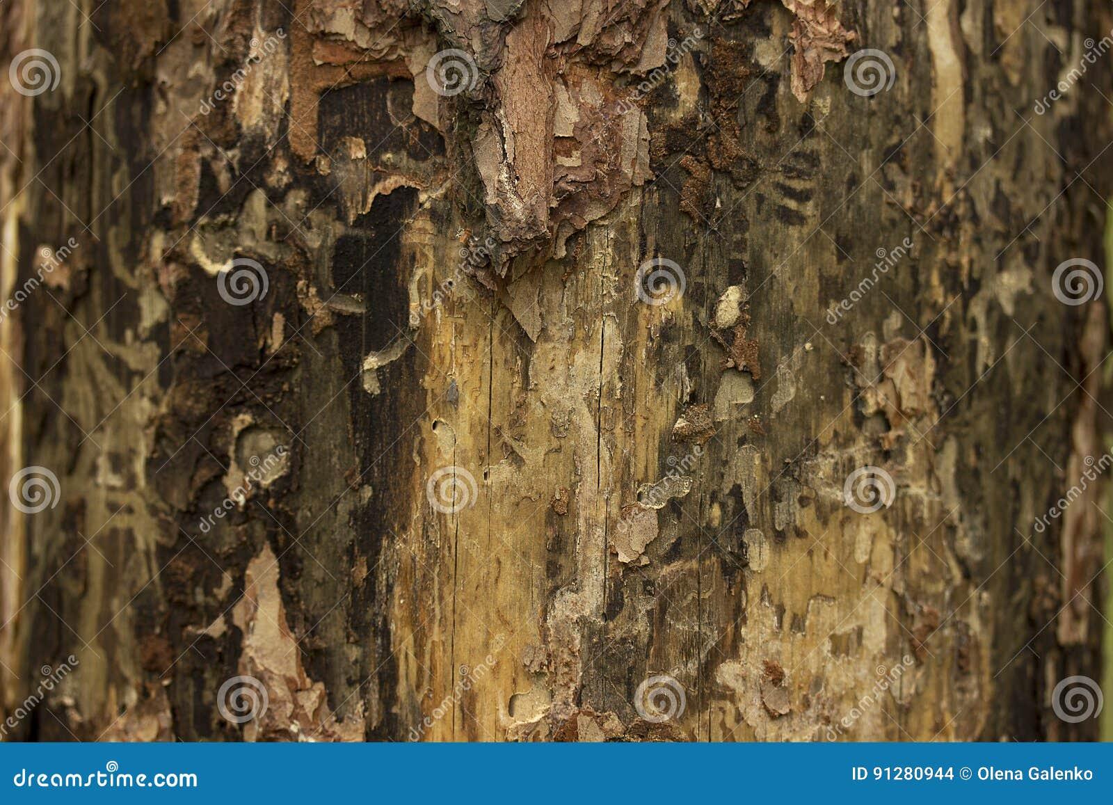 Sörja övre för textur eller för bakgrund för trädskäll nära