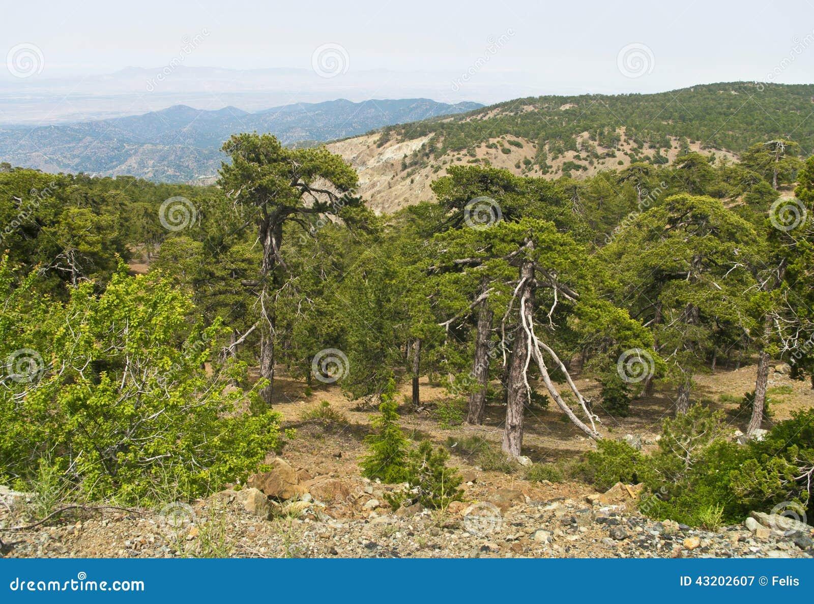 Download Sörja bergskogen fotografering för bildbyråer. Bild av natur - 43202607