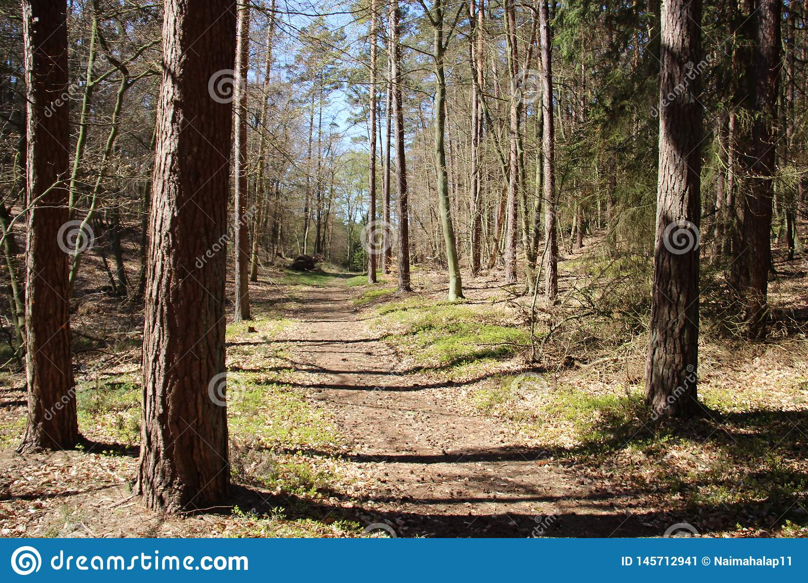 Sörja Forest And Pathway With Wild Berry Tree