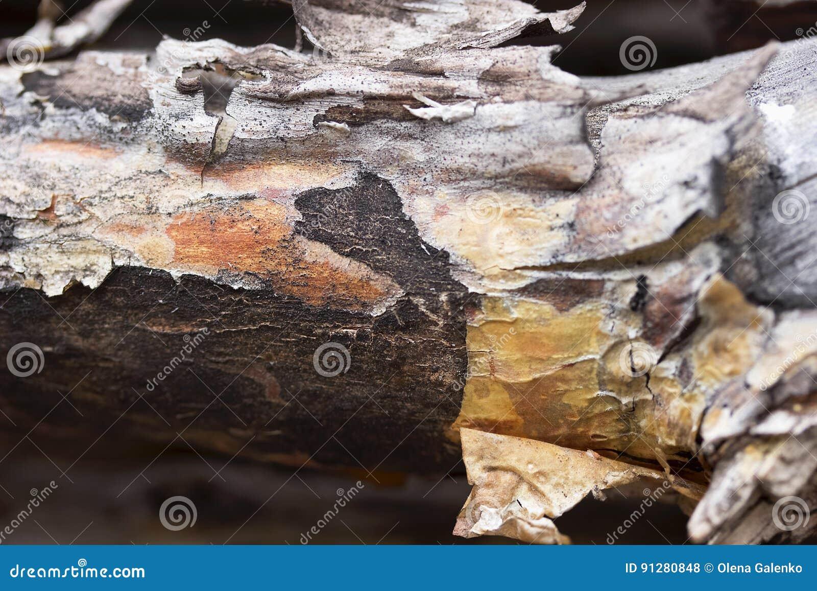 Sörja journalen med skället i det wood slutet upp