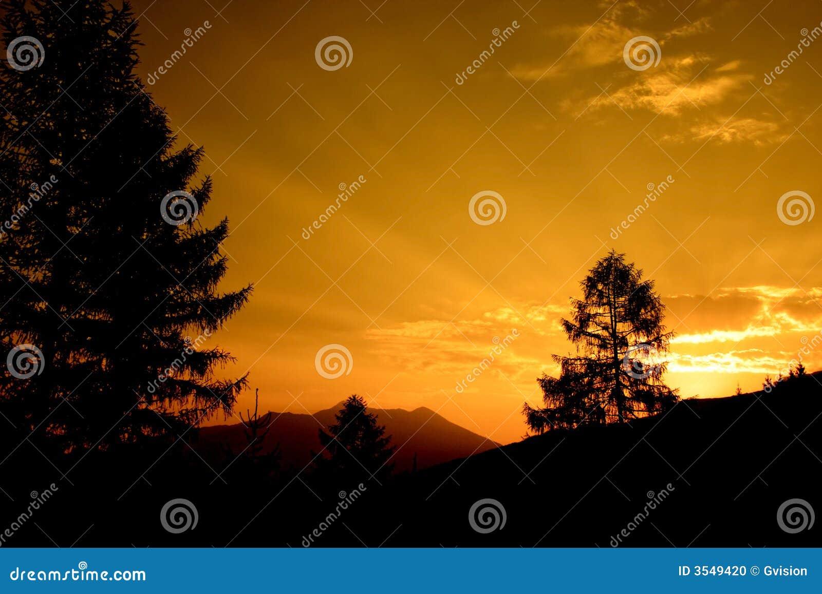 Sörja solnedgångtreen