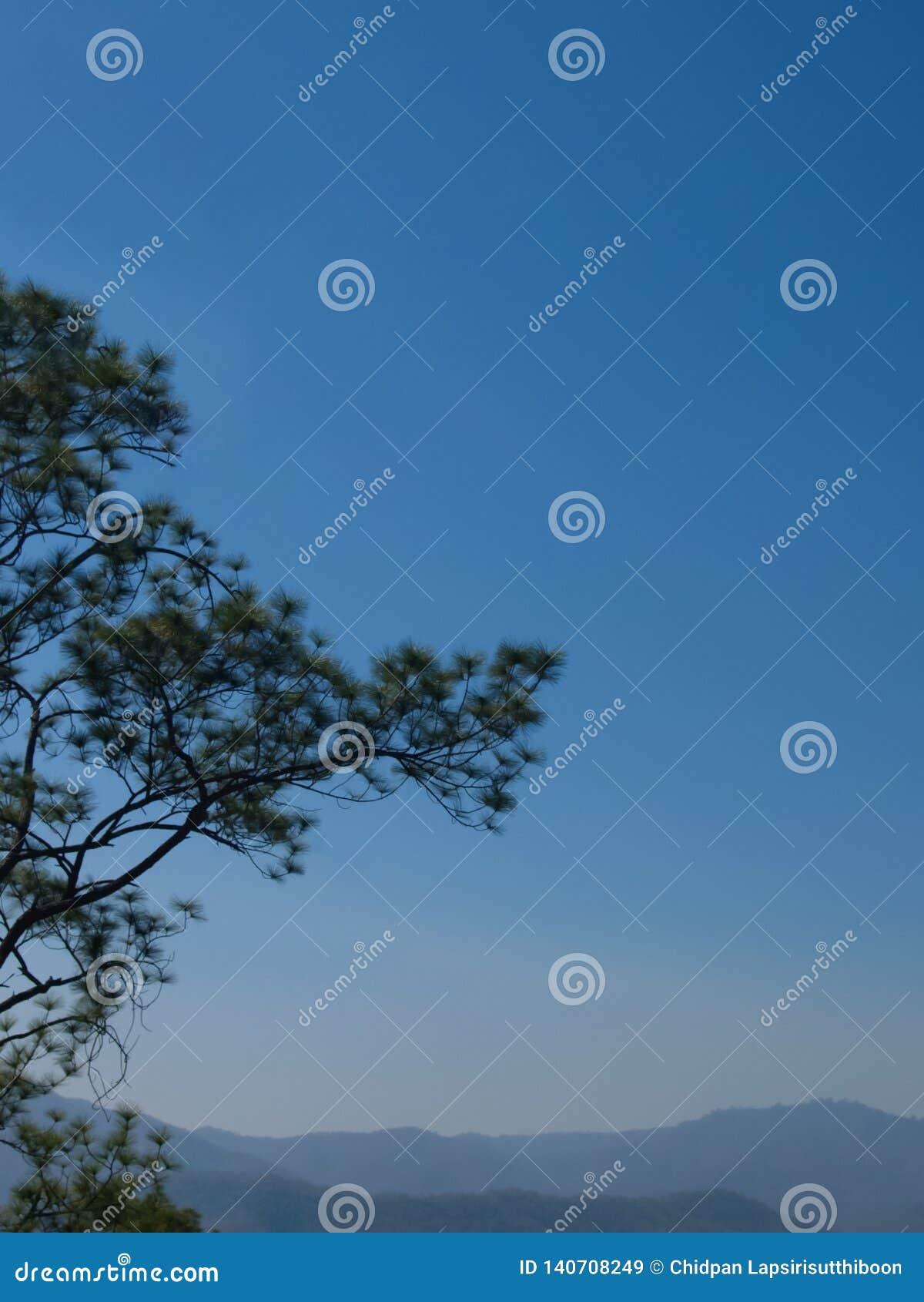 Sörja träd på bergbakgrunden och ljus blå himmel på en molnfri dag för naturlig bakgrund