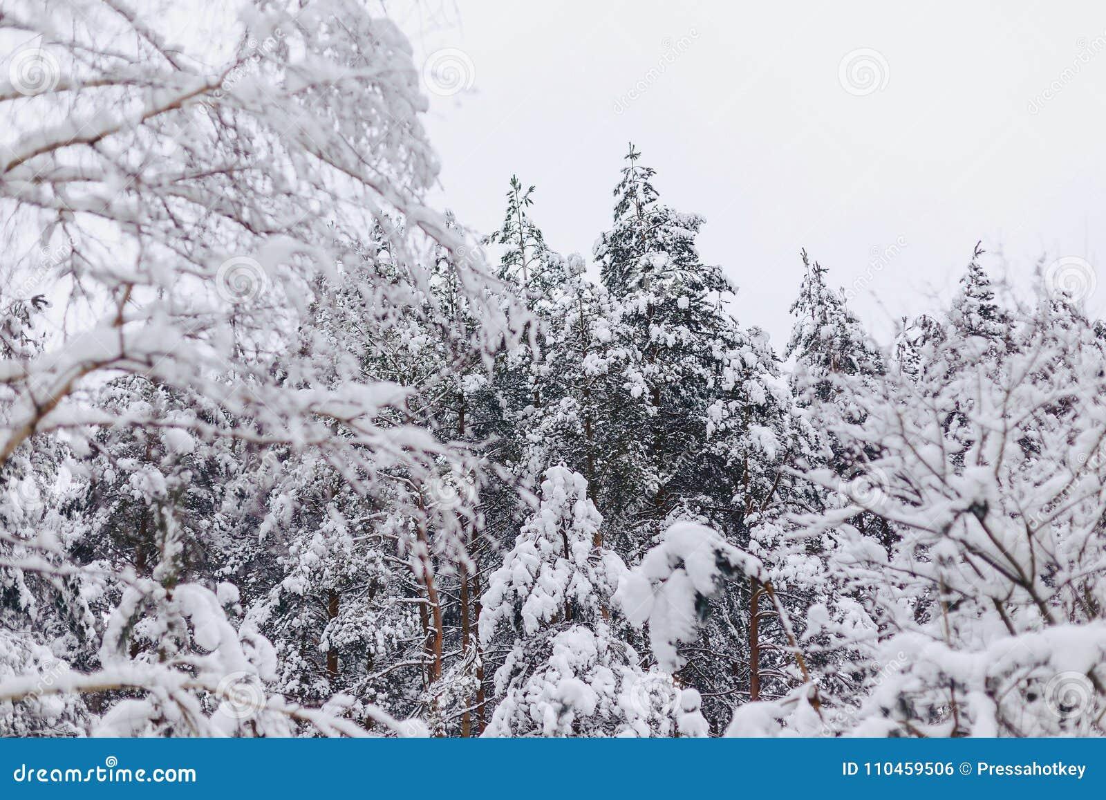 Sörja trädet i snöräkningen