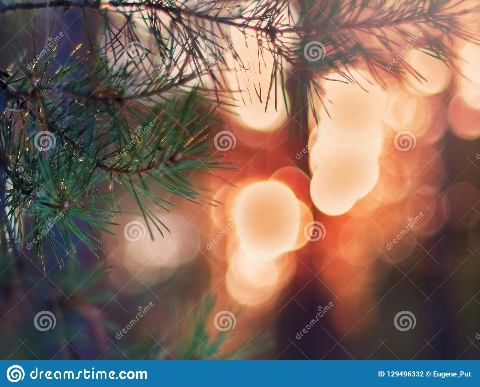 Sörja trädgranfilialen i de vinterForest Colorful Blurred Warm Christmas ljusen i bakgrund Garnering designbegrepp med C