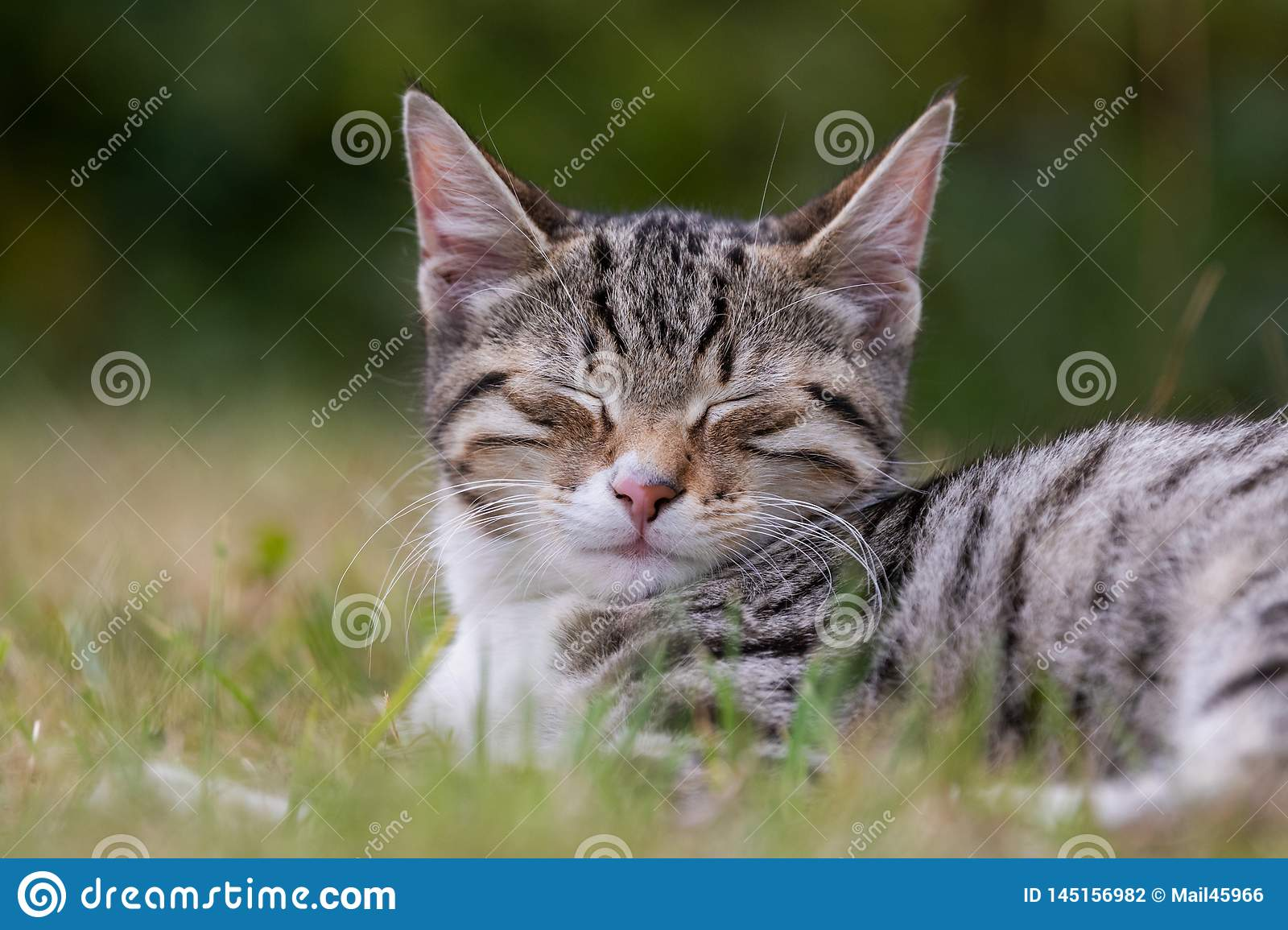 Söt kattunge i gräset