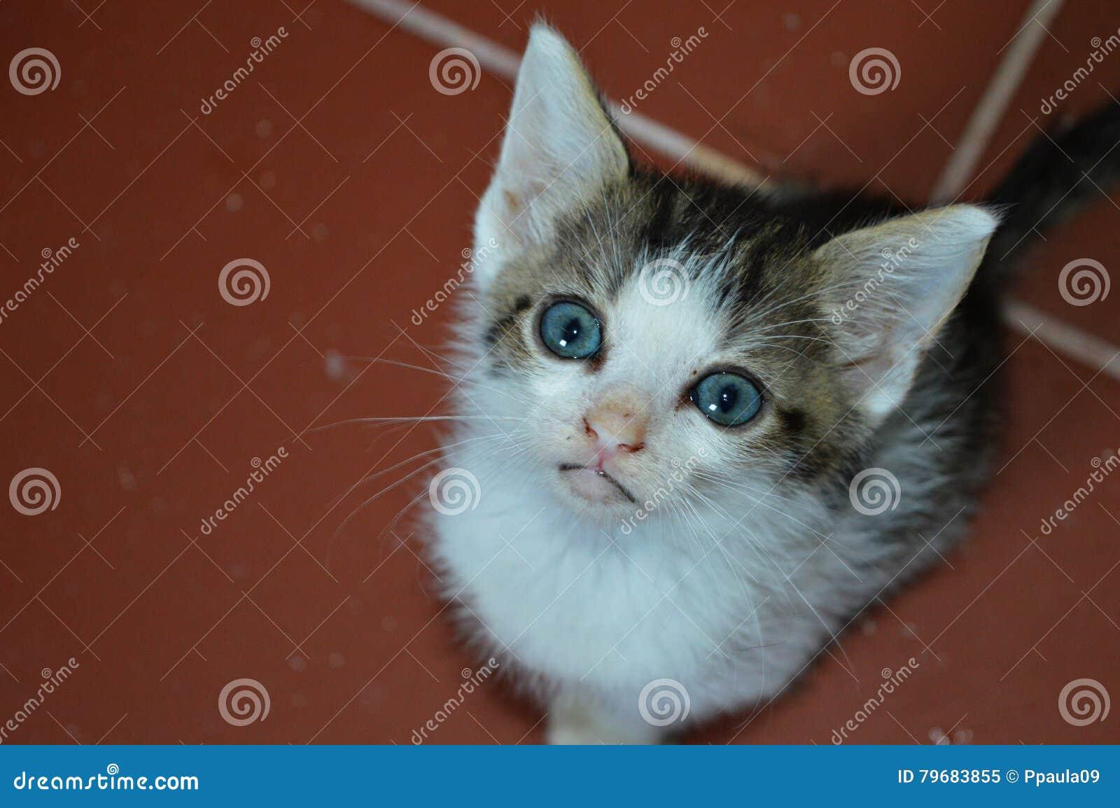 Süße baby katzen
