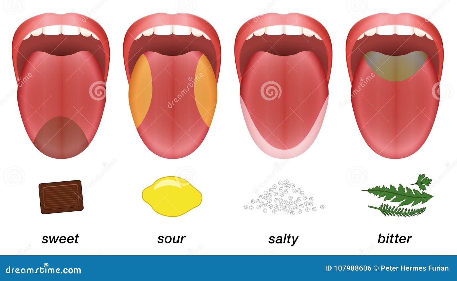Fantastisch Papillen Auf Der Zunge Ideen - Anatomie Von Menschlichen ...