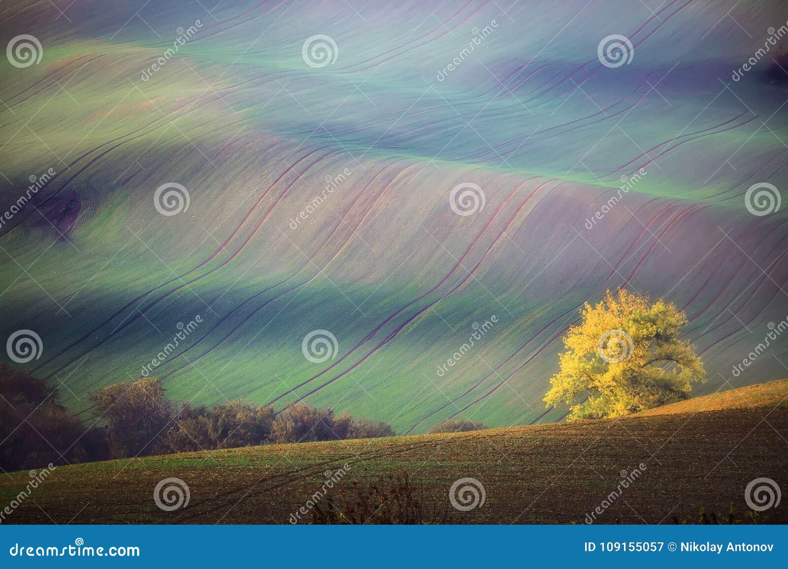 Süd-Moravian-Landschaft mit Bäumen und gewellten grünen Feldern im Herbst Gewellte Felder in der Tschechischen Republik Tscheche