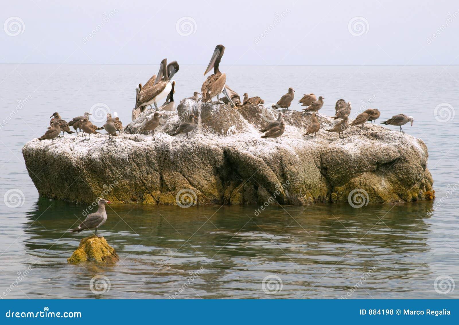 Są pelikanów ptaków morskich