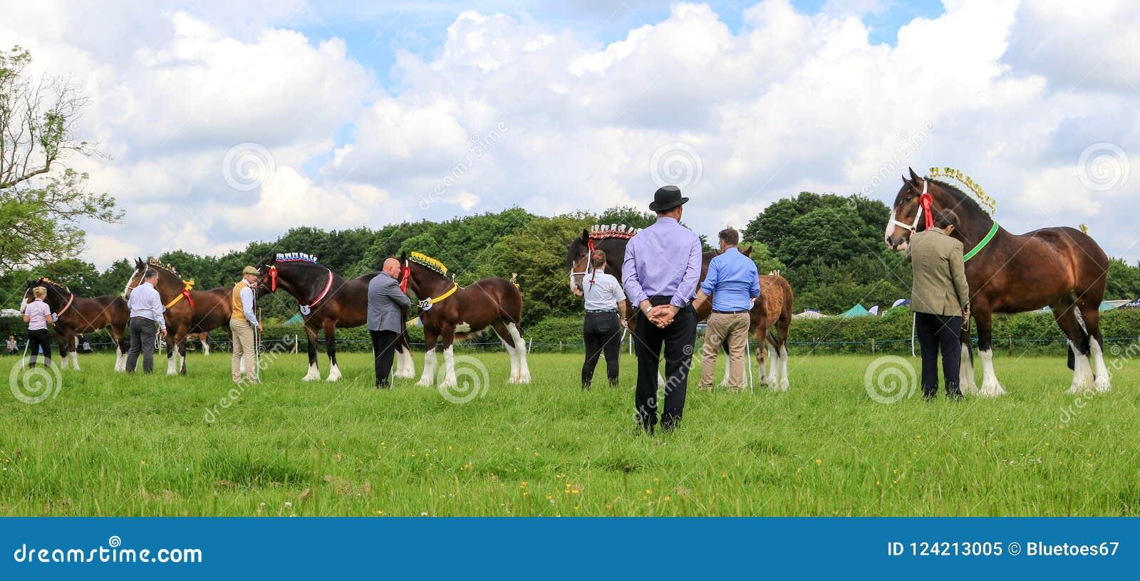 Sędzia sądzi konie przy przedstawieniem