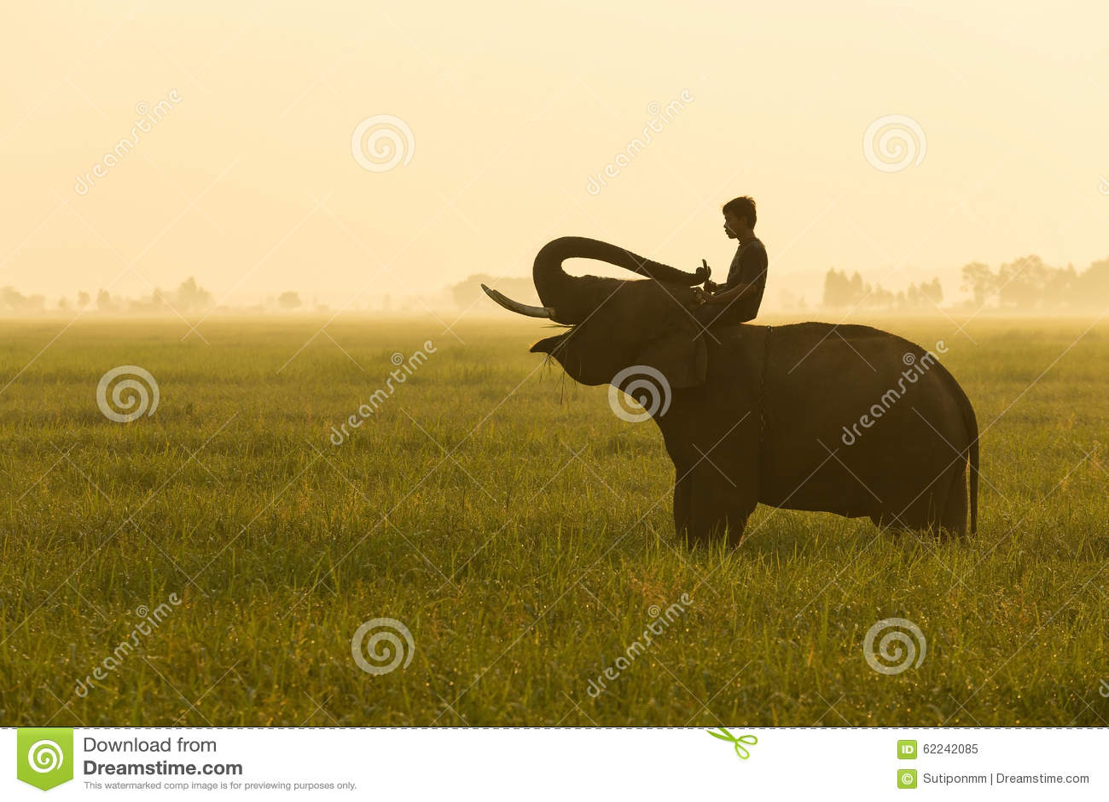Słoń i mahout