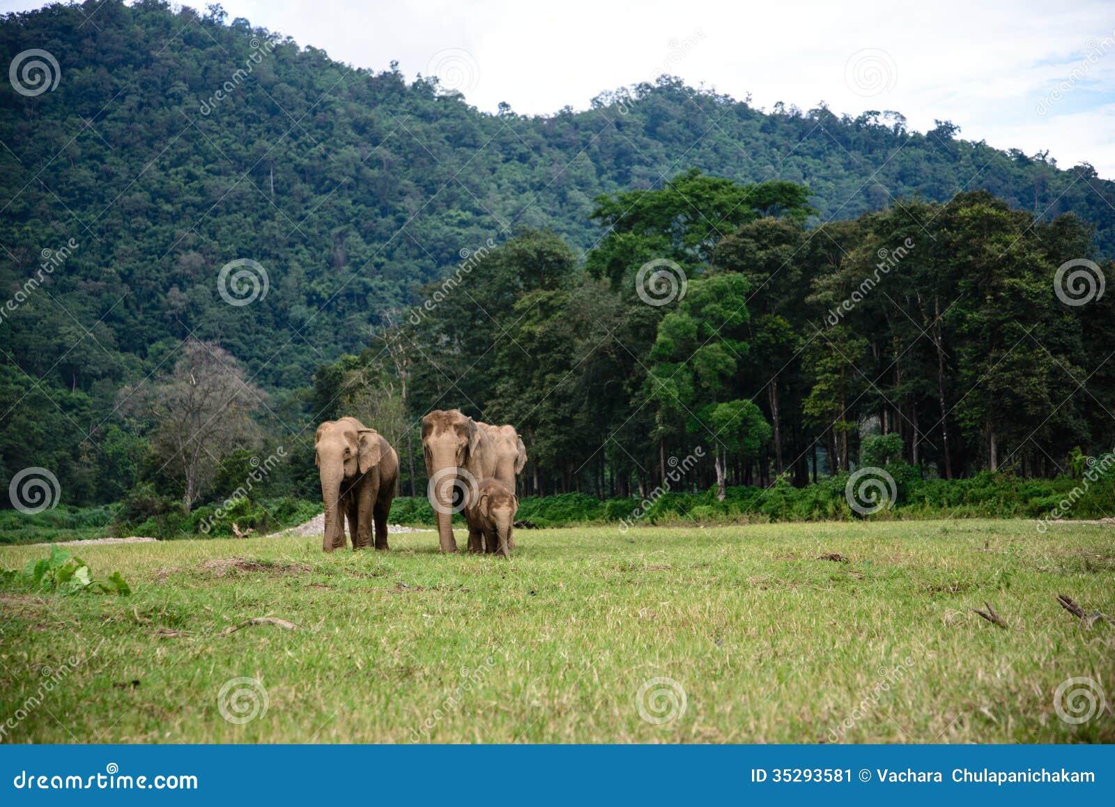 Słoń rodzina