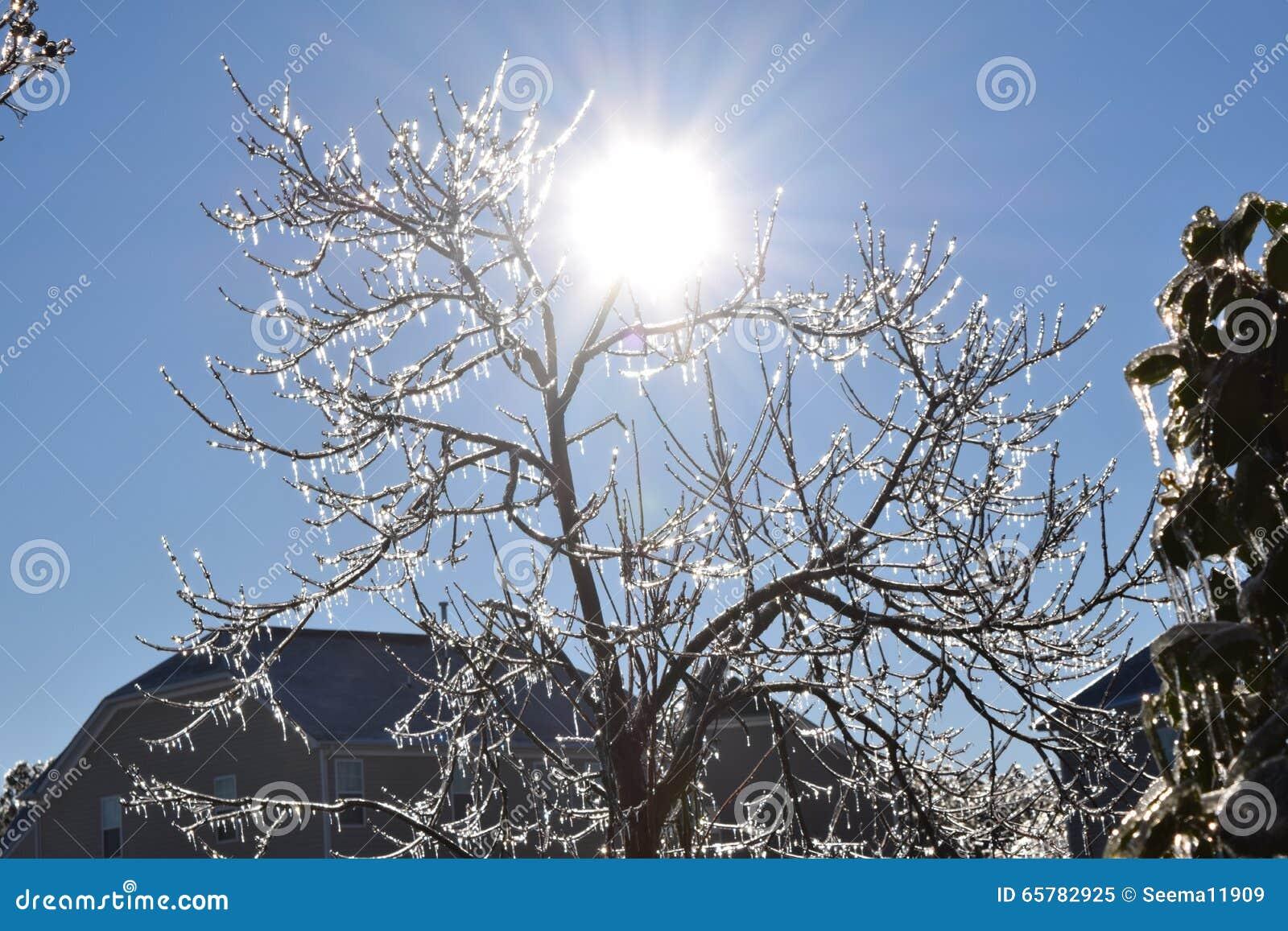 Słońc illuminats piękny sopel zakrywający drzewo