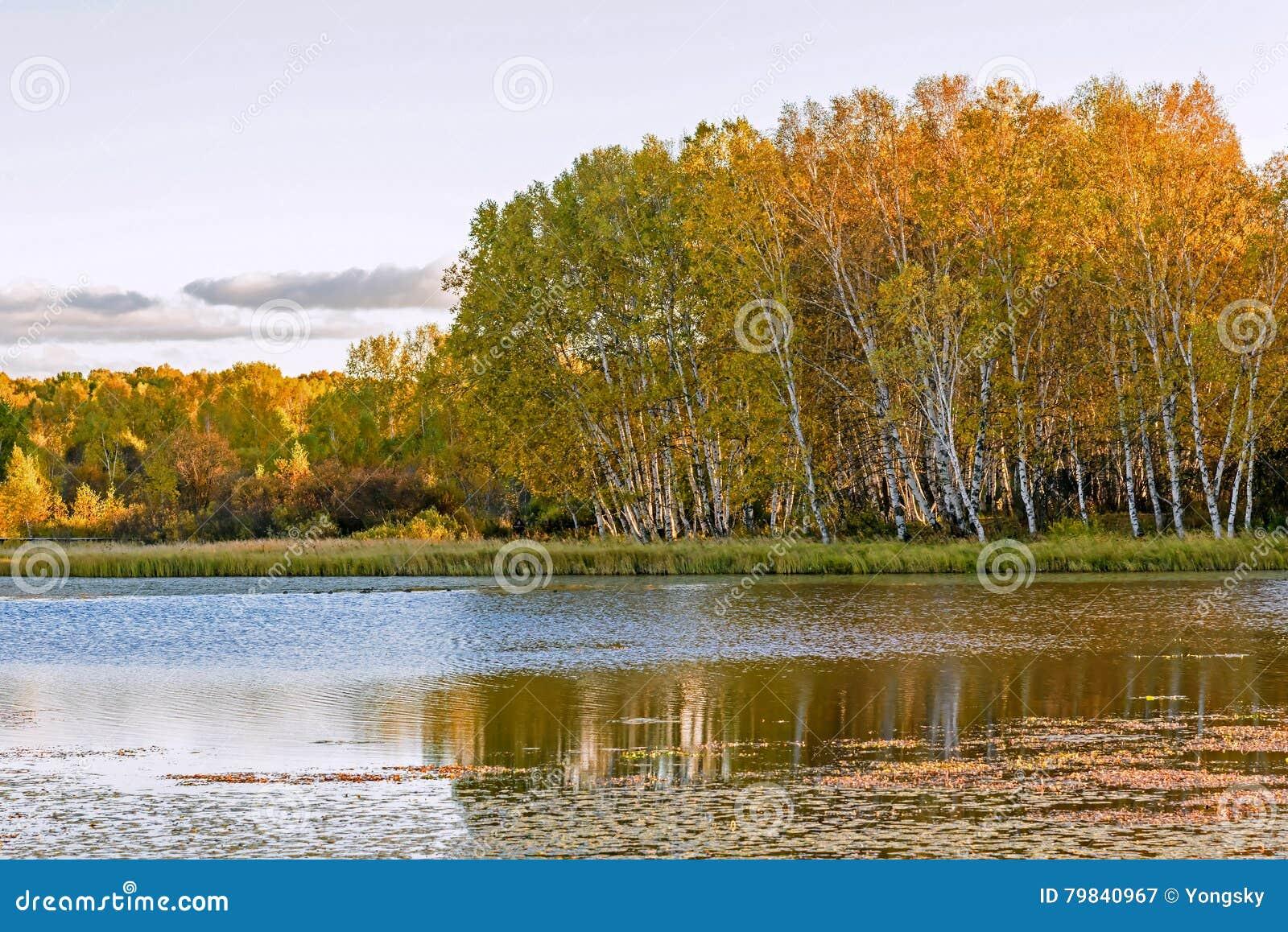 Słońce jezioro i Biała brzoza w jesieni