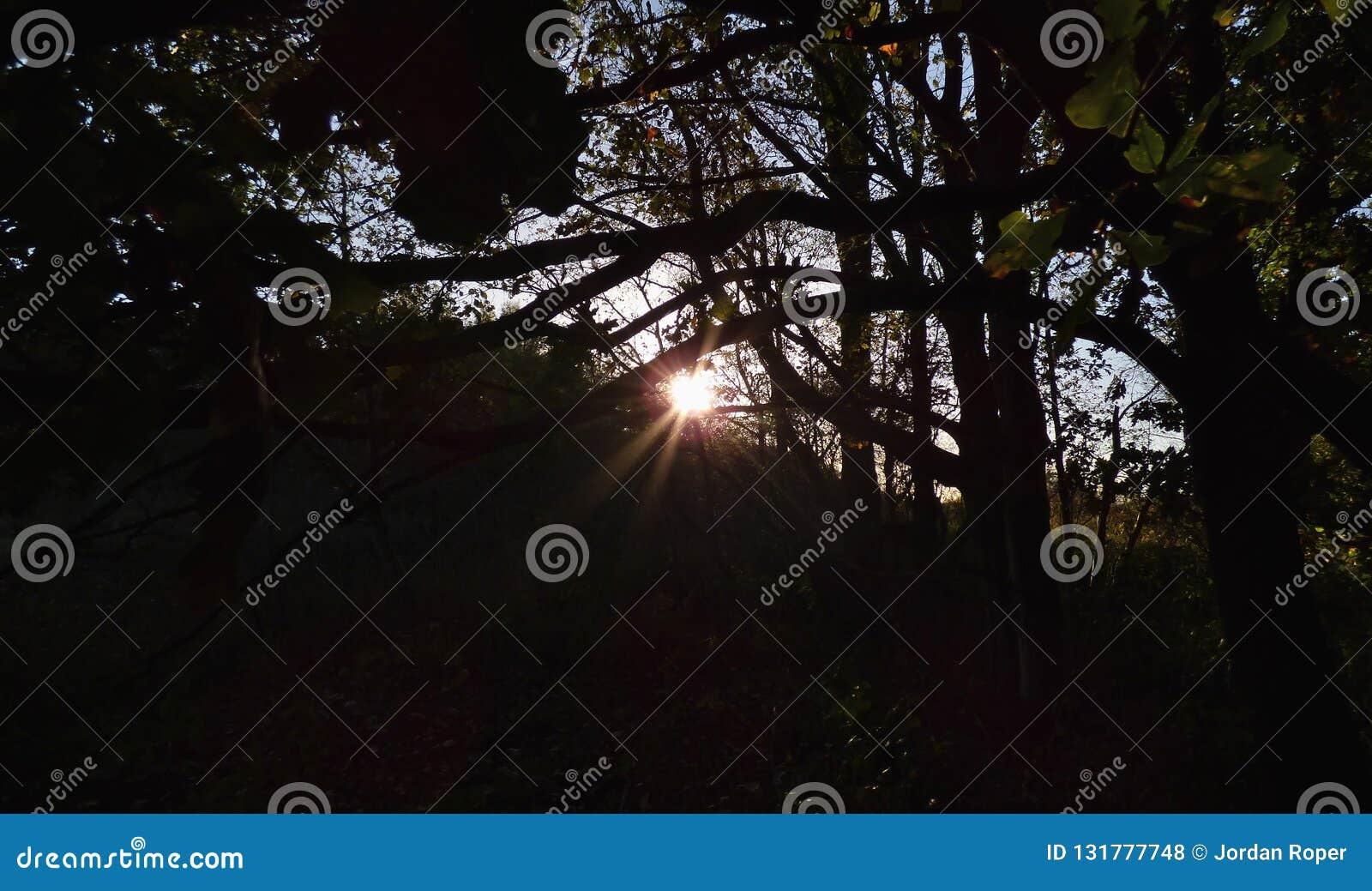 Słońce przez warkocza, ciemny przedpole z jaskrawym światłem słonecznym, fotografia nabierająca UK