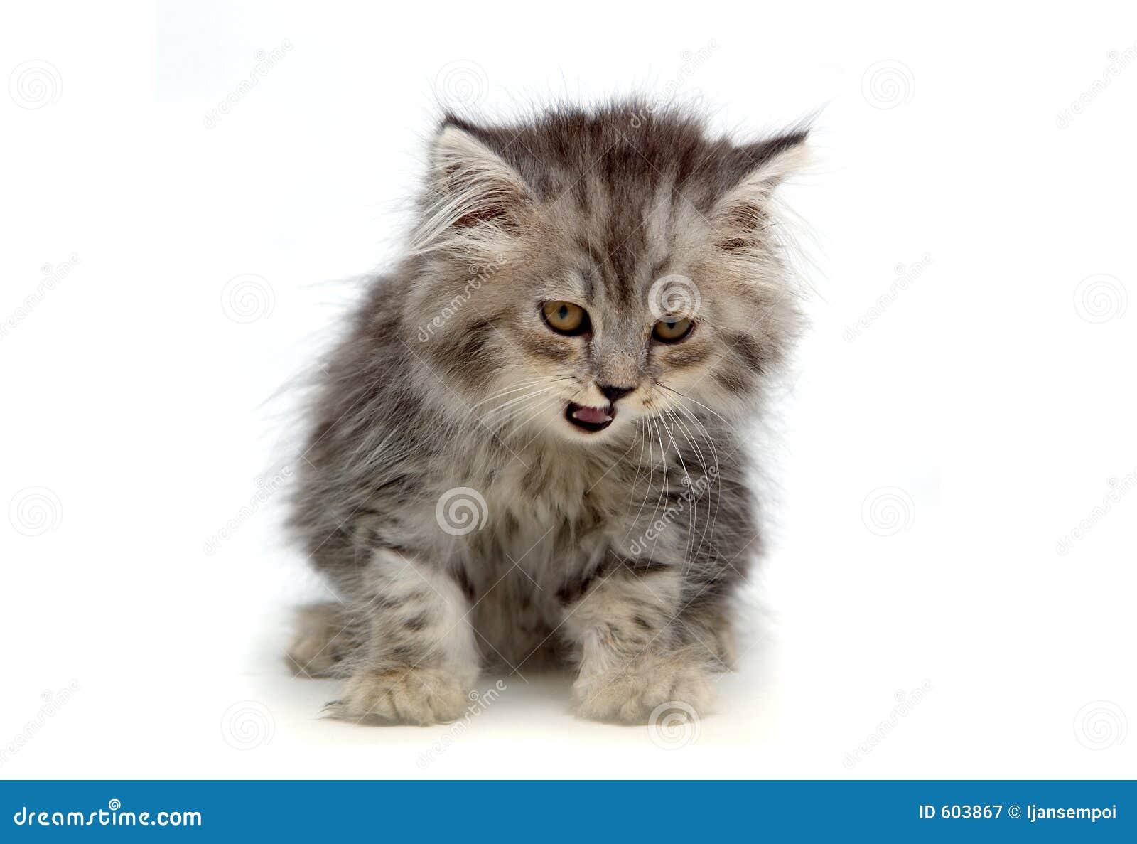 Słodka kotku