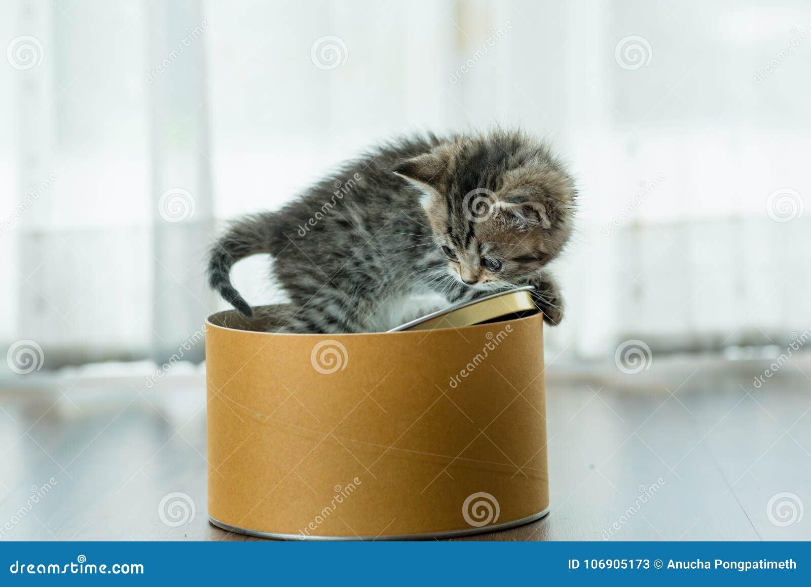 Słodka pudełkowata kotku