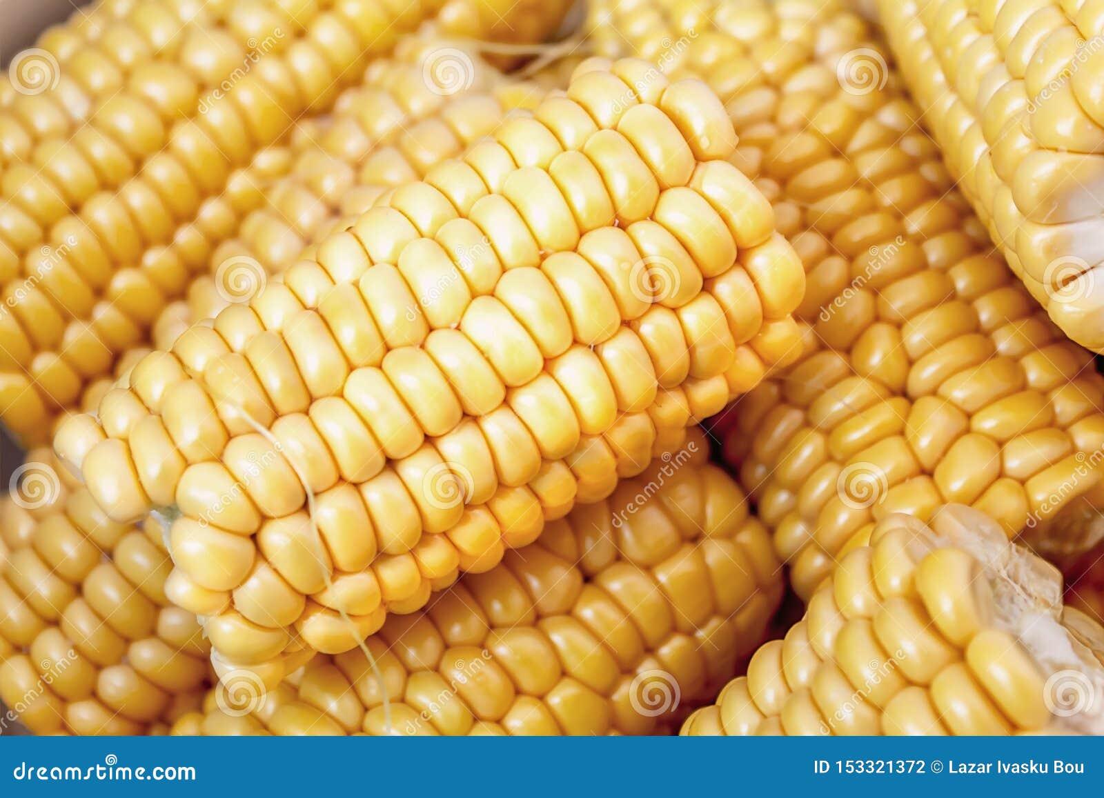 Słodka yelow kukurudza w zakończeniu w górę