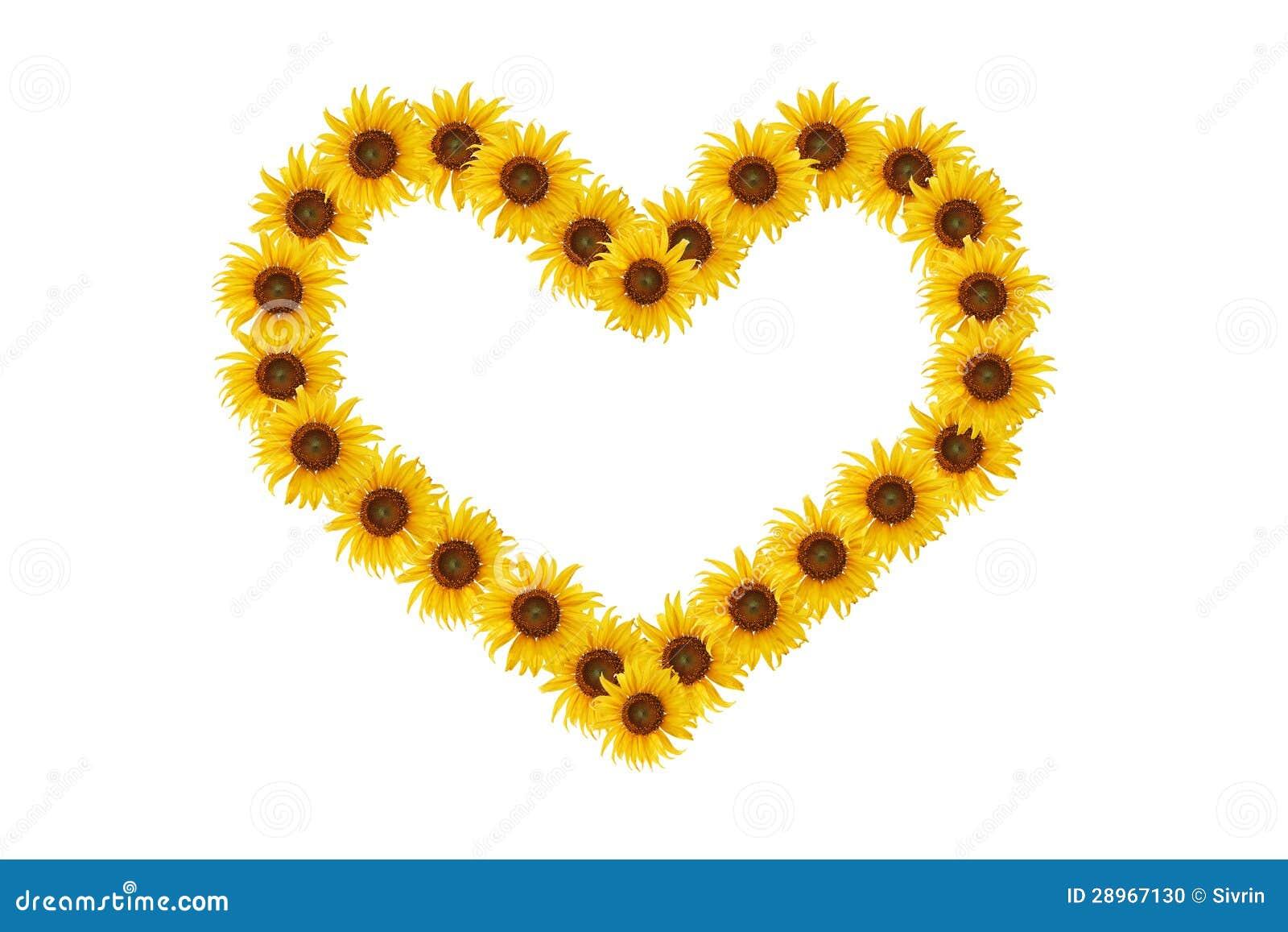 Słonecznik serce.