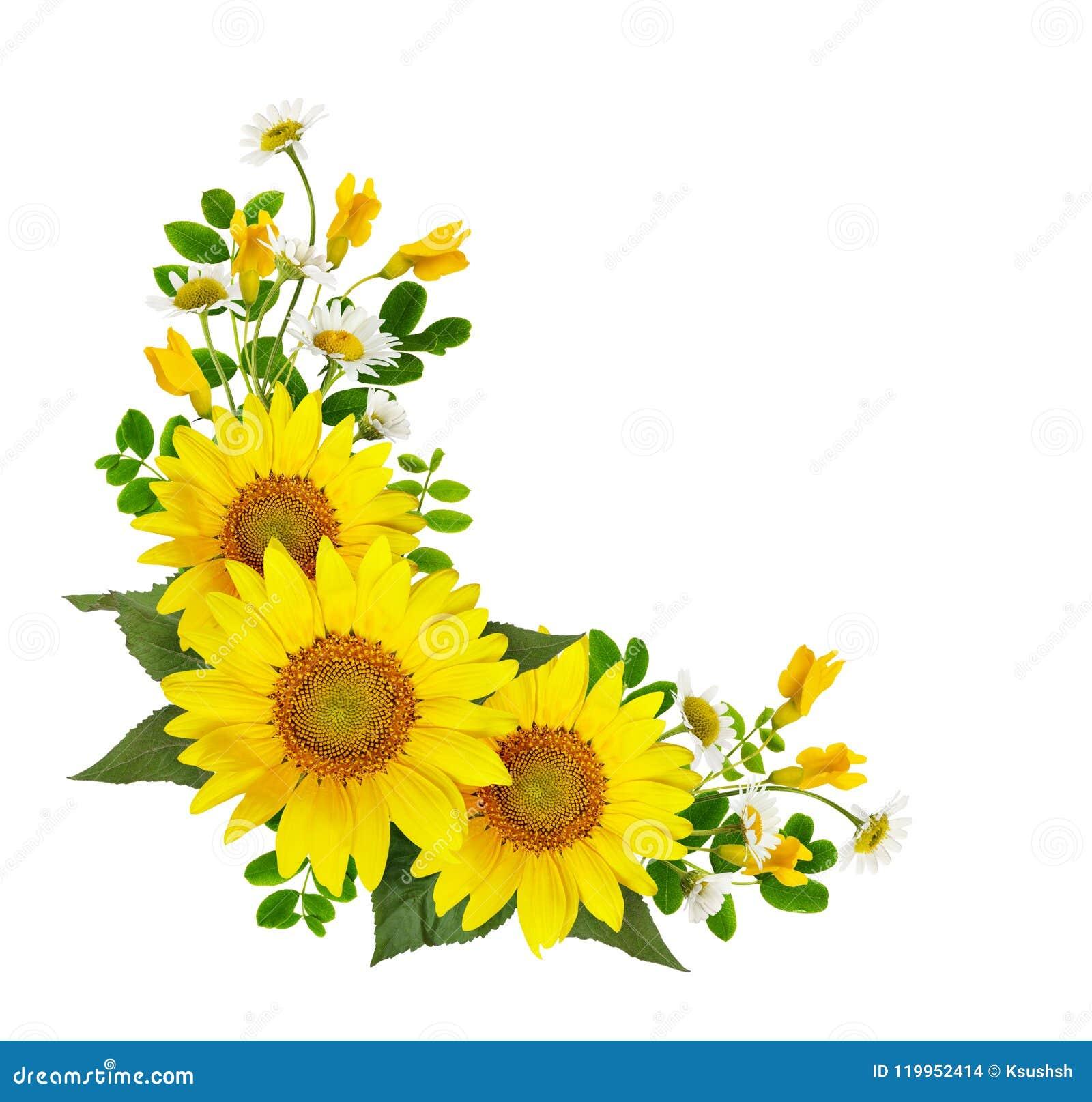 Słoneczniki, stokrotki, akacja kwiaty i zieleń liście w cor,