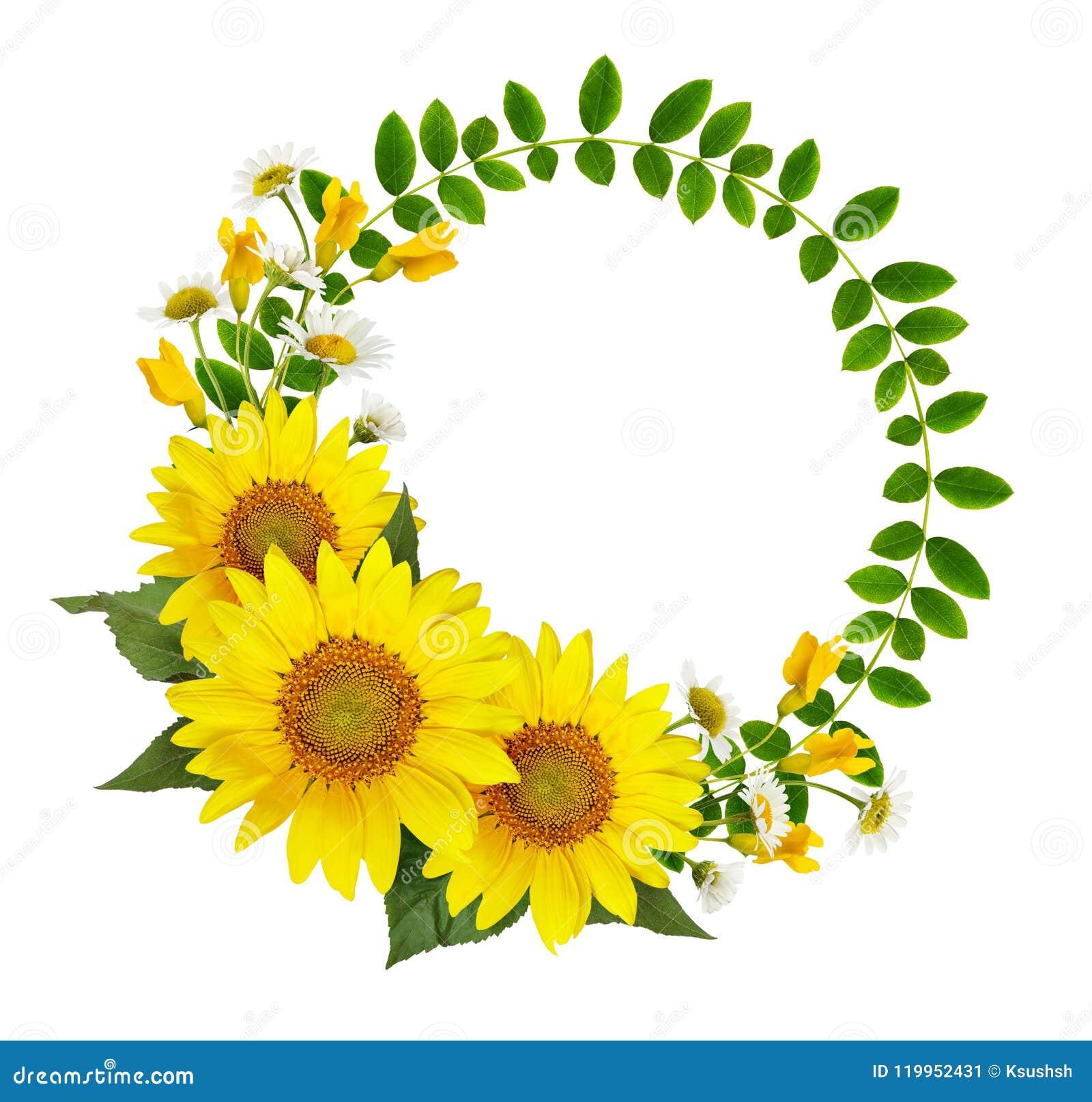 Słoneczniki, stokrotki, akacja kwiaty i zieleń liście w rou,