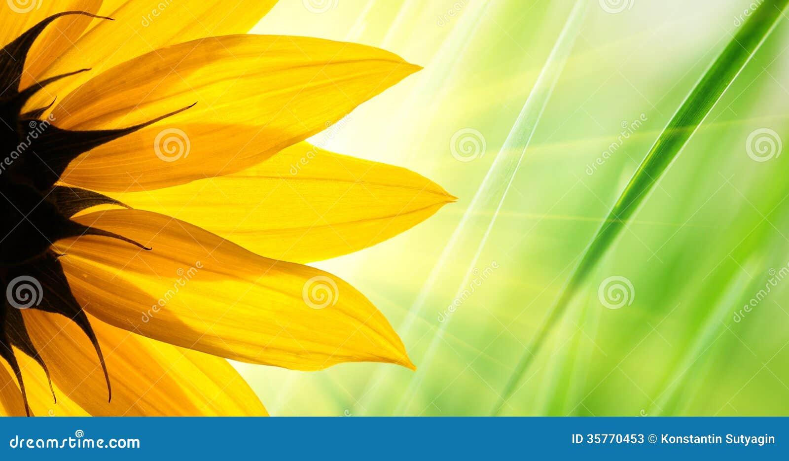 Słonecznikowy kwiat