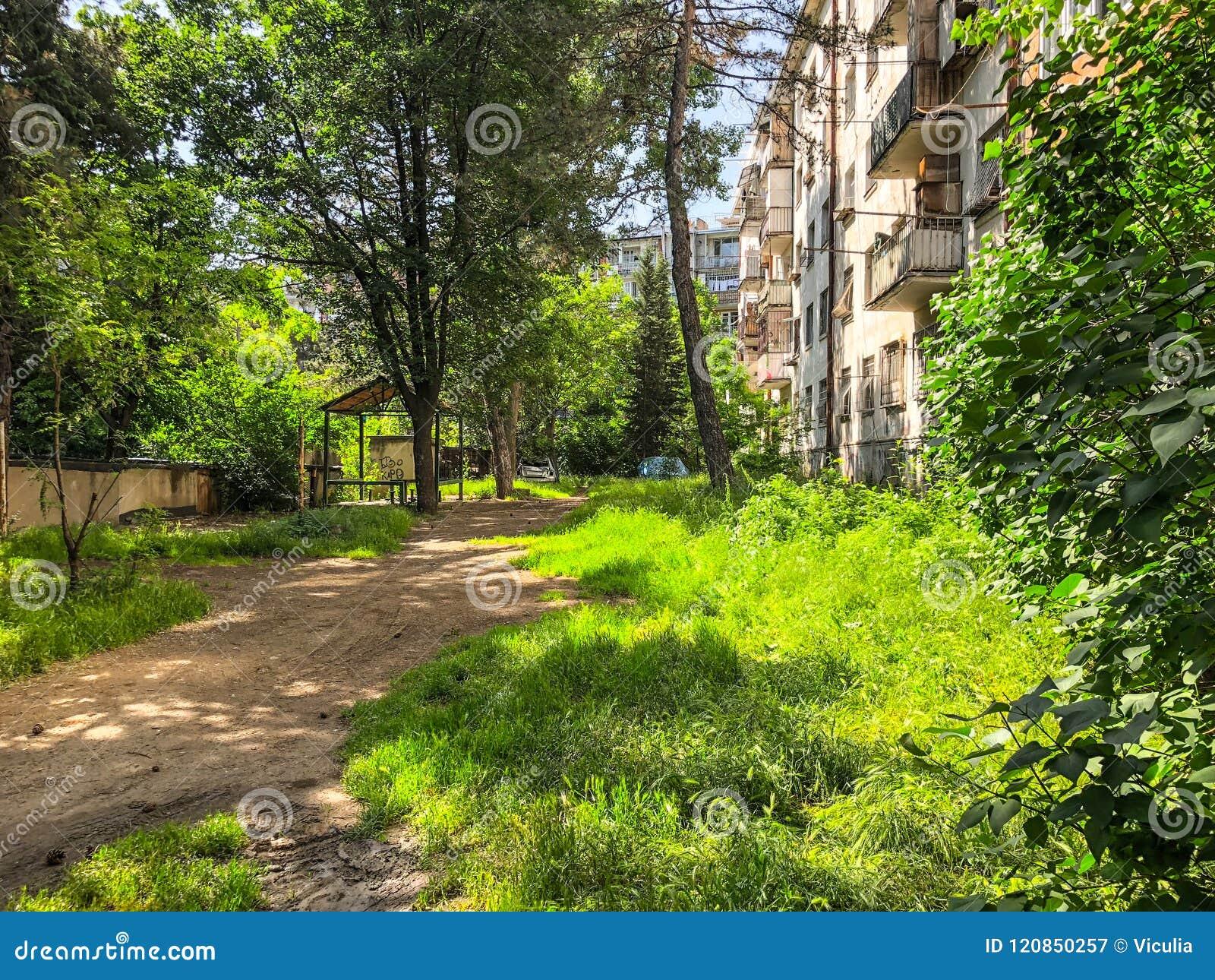 Słoneczny dzień w miasto mieszkaniowym jardzie Sosna rożki spadali ziemia od sosny