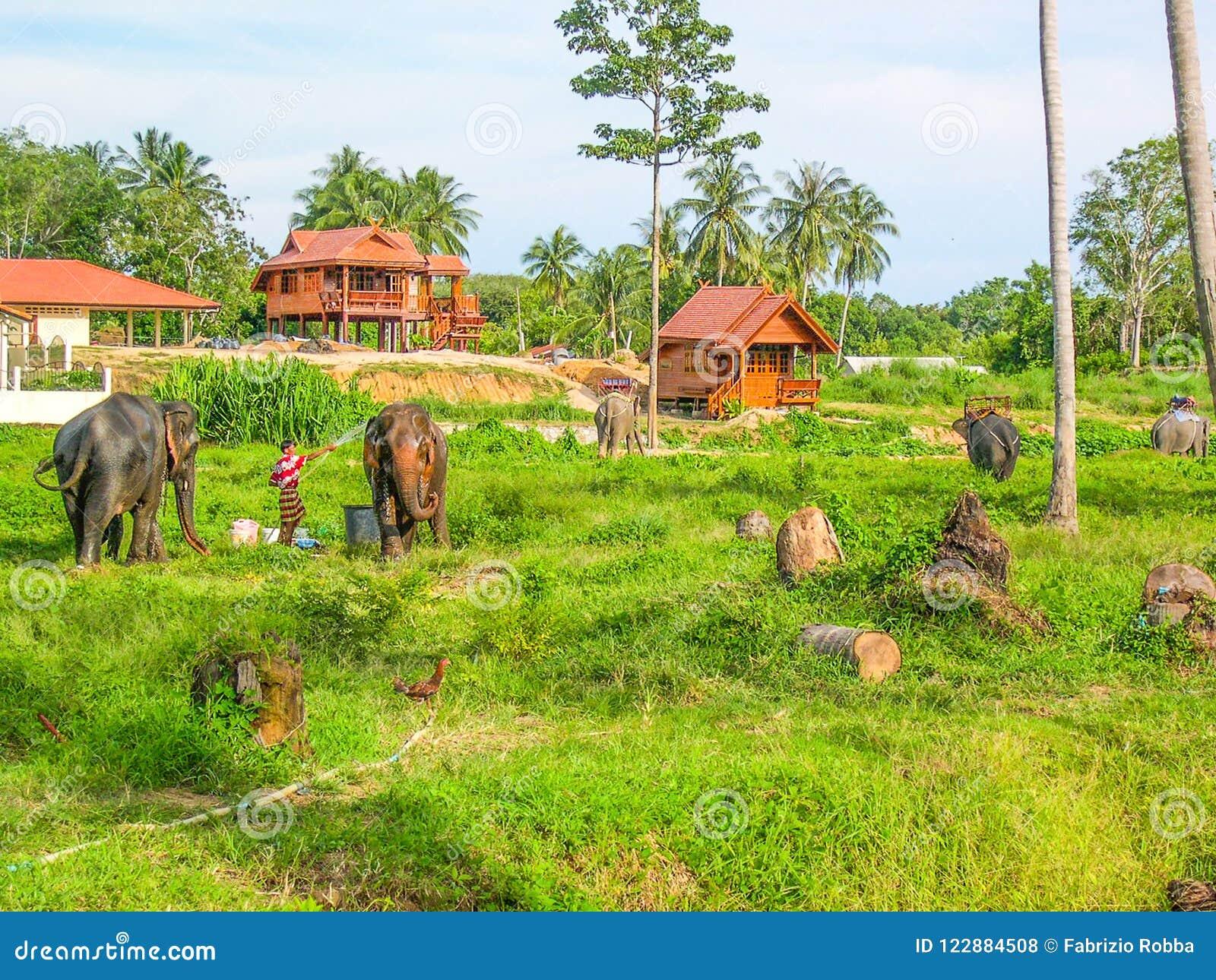 Słonia gospodarstwo rolne w Phuket, Tajlandia