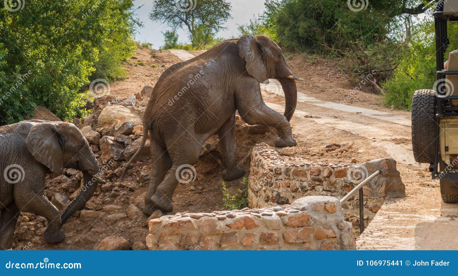 Słonia i dziecka wspinaczka przed safari pojazdem